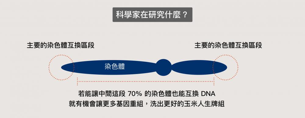 中間這一大段極少互換的染色體,可能有著讓下一代更好的基因 資料來源│王中茹提供、圖說改編│林婷嫻 / 張語辰