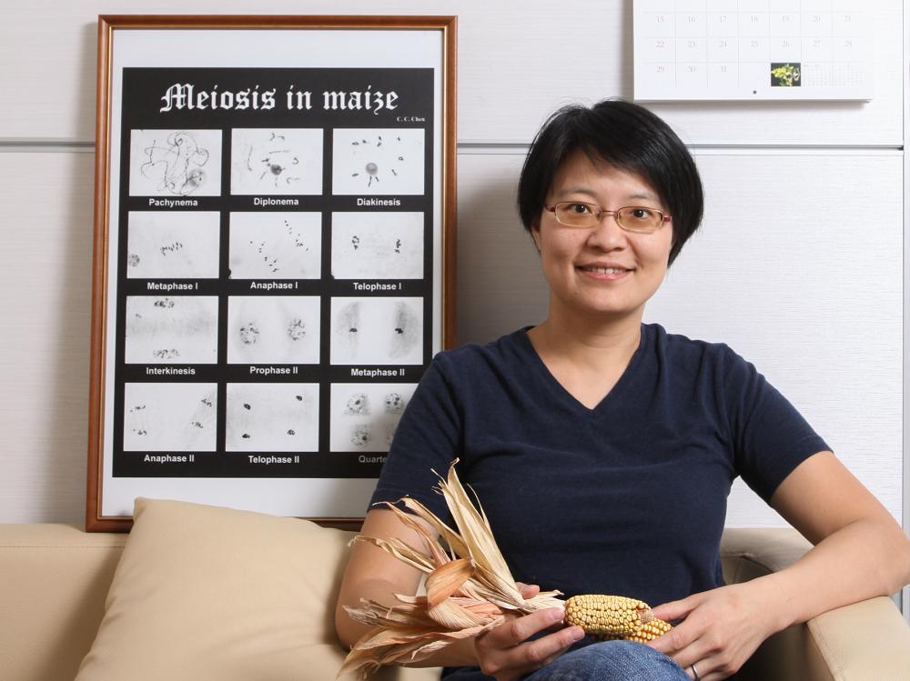 王中茹研究團隊鑽進顯微鏡的世界中, 發現促成玉米基因「 天然洗牌」的關鍵蛋白質 DSY2 。 攝影│張語辰