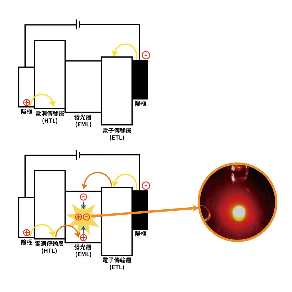 OLED 光電元件構造:當電洞與電子經過傳輸層,來到發光層之後,會給予 OLED 化合物電能,使之激發出光色,如照片實體所示。圖片來源│李怡葶提供 圖說改編│林婷嫻、張語辰