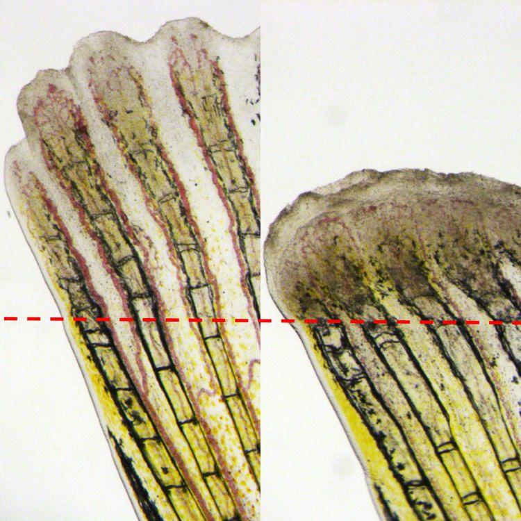 如何跟金鋼狼一樣再生複雜組織?渦蟲最多可以切成幾段?當開始問這些問題,就離了解再生機制更近一步。文章參考│「從動物身上問對問題,就可以找到答案!」陳振輝談斑馬魚的超強再生力