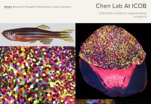 看起來彷彿藝廊的網站,每一張照片,都訴說著對再生研究的好奇與發現。 圖片來源│陳振輝實驗室網站
