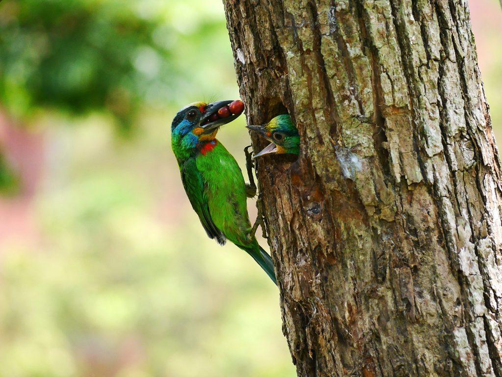 中研院不只有研究員,這裡同時住著許多野生生物:鳥類、昆蟲和植物們!邀請你來看看牠們~文章參考│漫遊中研院自然生態樂園,拜訪野生好朋友