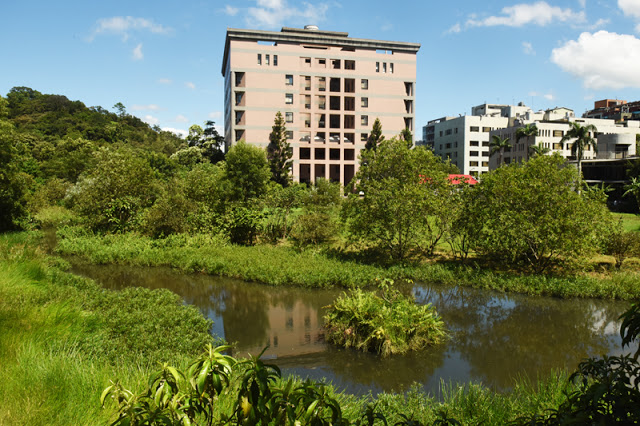 生态池的植物种类繁多,拥有小而完整的自然生态系。 图片来源│生态志工队提供