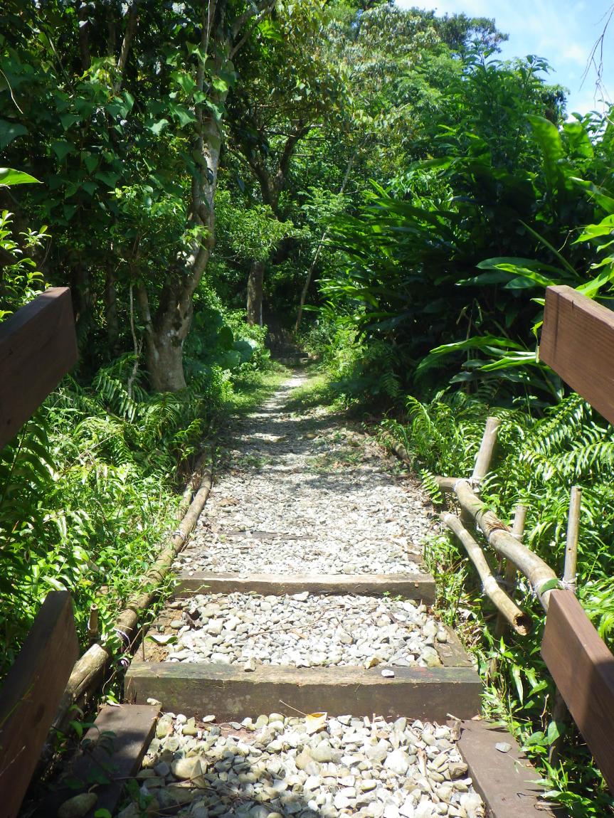 通往森林的路,每一步都是生態志工隊的心血結晶,請放慢腳步觀察哪些野生好朋友正在陪你散步。圖│生態志工隊
