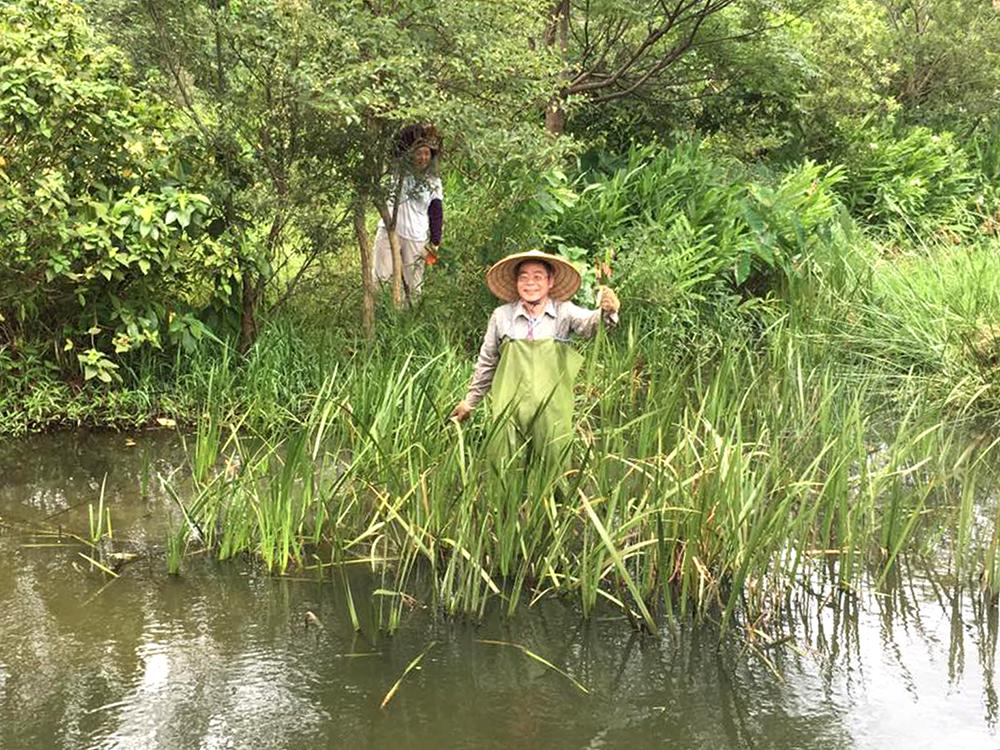 中研院生態志工隊要上山入莽林、下水進泥沼,協助維護生態平衡。圖│生態志工隊
