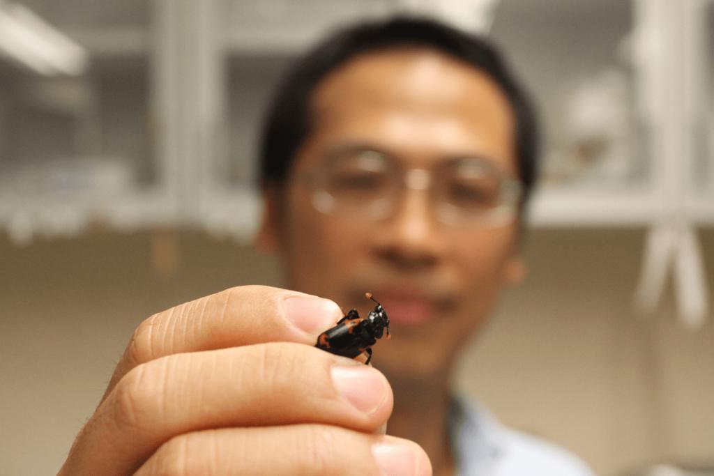 尼泊爾埋葬蟲體長不足 2 公分,但是牠們的多元合作策略,透過沈聖峰的研究,成為台灣在地的生物學知識寶藏。 攝影│張語辰
