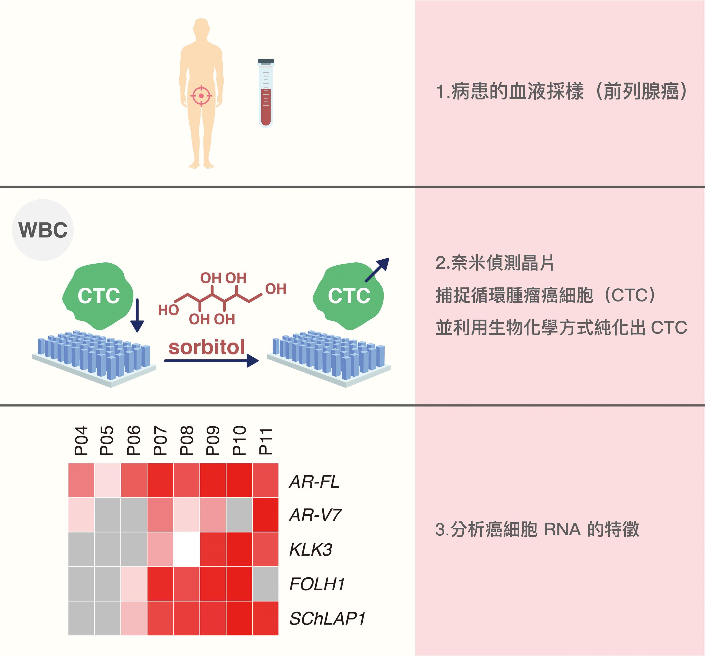「奈米偵測晶片」加上特別設計的有機奈米結構,可用來辨識血液中的癌細胞、計算數量變化、抓取純化癌細胞,提供數據給醫師參考。 資料來源│尤嘯華提供 圖說重製│王怡蓁、張語辰