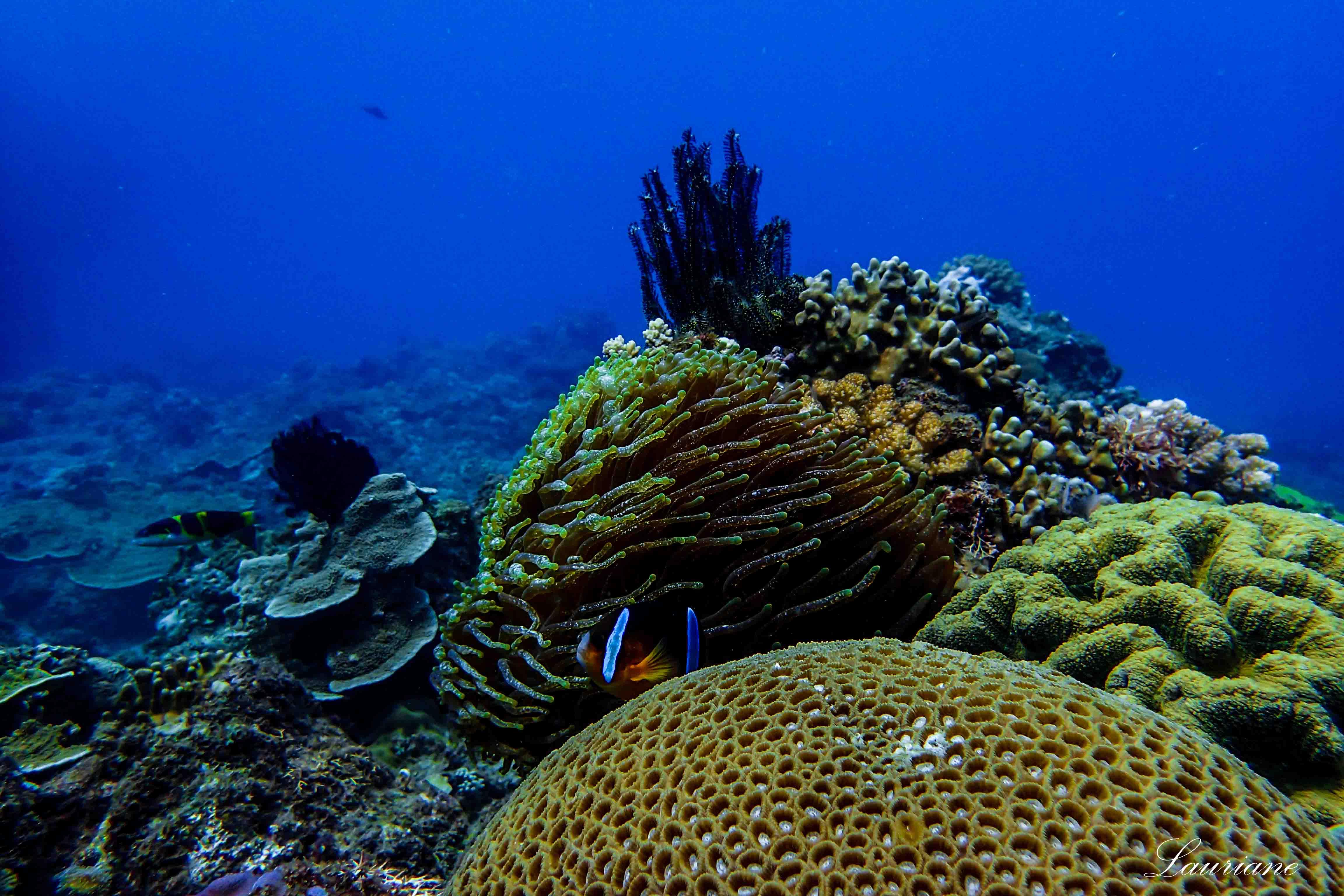 Lauriane 潛水時拍攝的海底風景。 攝影│Lauriane