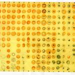 顯微鏡下瘧疾原蟲的分類表。《帝國的醫師:萬巴德與英國熱帶醫學的創建》
