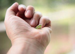 「我們目前的自然環境就像一本被風吹得扉頁四散的書,我們能夠搶救的頁數愈多,未來演化之神的巧手在改寫大自然的傳奇時,才會有更多的材料可以運用。」──《森林祕境:生物學家的自然觀察年誌》 圖片來源|iStock