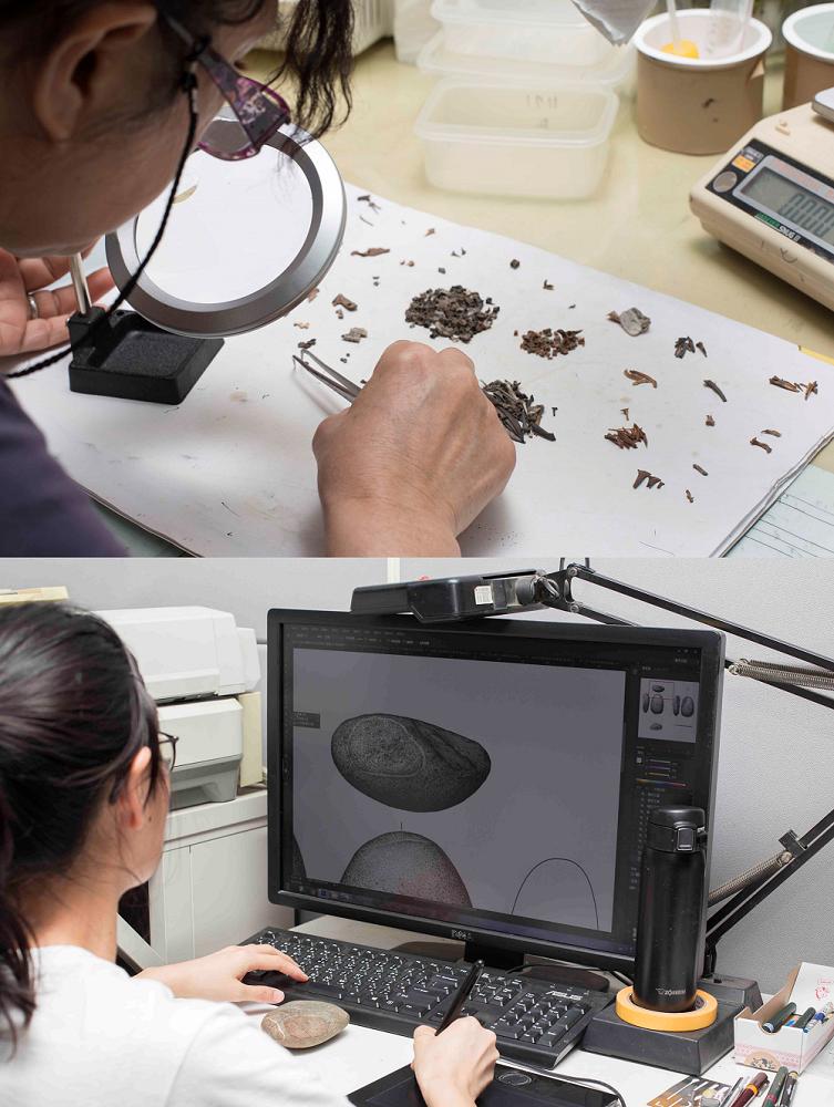 南科考古工作室中,動物骨骼室和繪圖室的工作情景。 攝影│張語辰