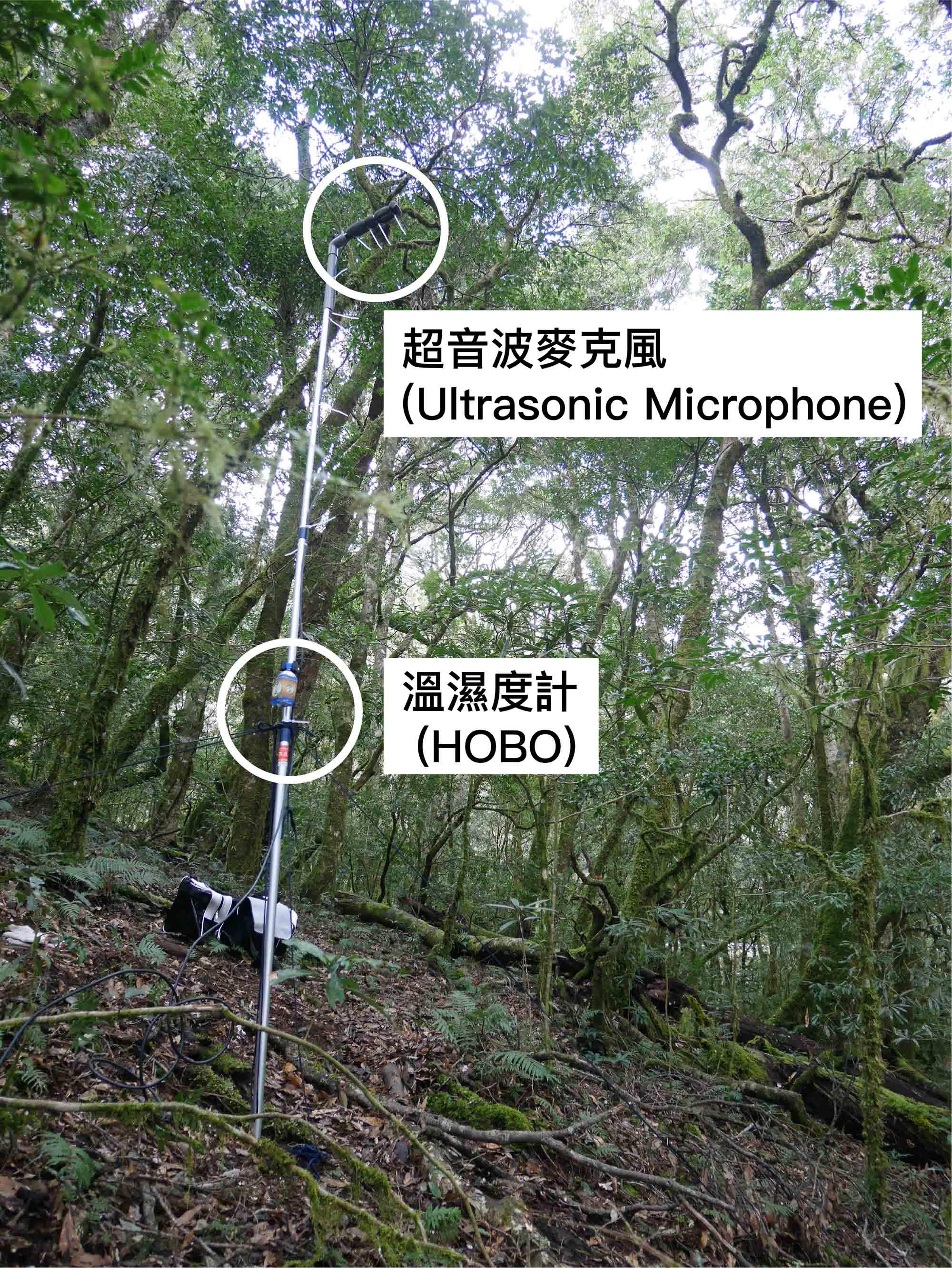 收錄蝙蝠聲音的超音波麥克風 (Ultrasonic Microphone) 與溫濕度計 (HOBO)。圖│端木茂甯、李佳紜