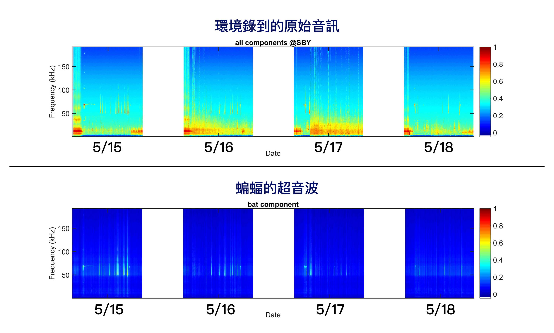 團隊錄到的原始音訊 (上方)、與 PC-NMF 分離出的蝙蝠超音波 (下方)。圖│端木茂甯