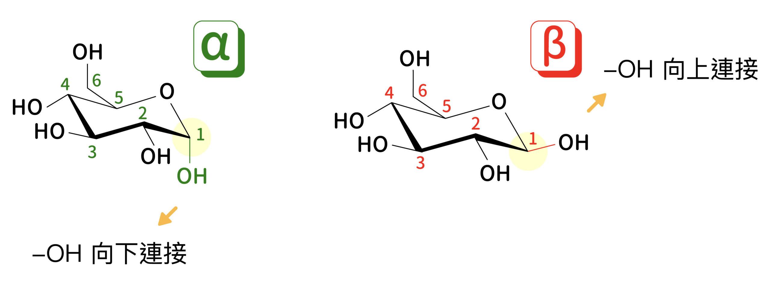 葡萄糖的首旋異構物,取決於一號碳原子上連接的 OH 官能基的角度。圖│研之有物、廖英凱(資料來源│倪其焜)