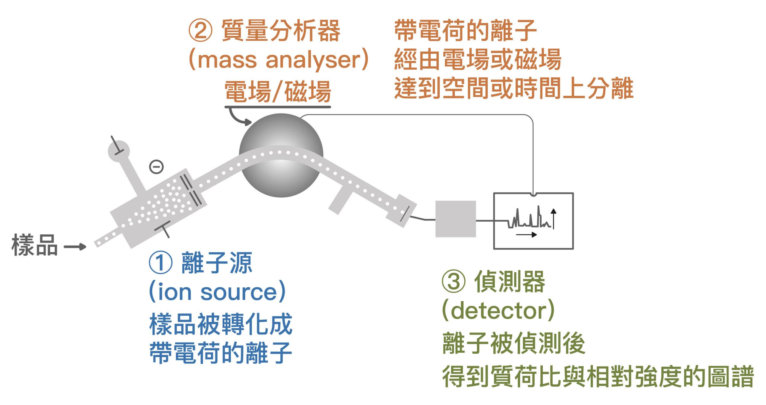 質譜儀的運作原理。圖│研之有物、廖英凱(資料來源│台灣 Wiki)