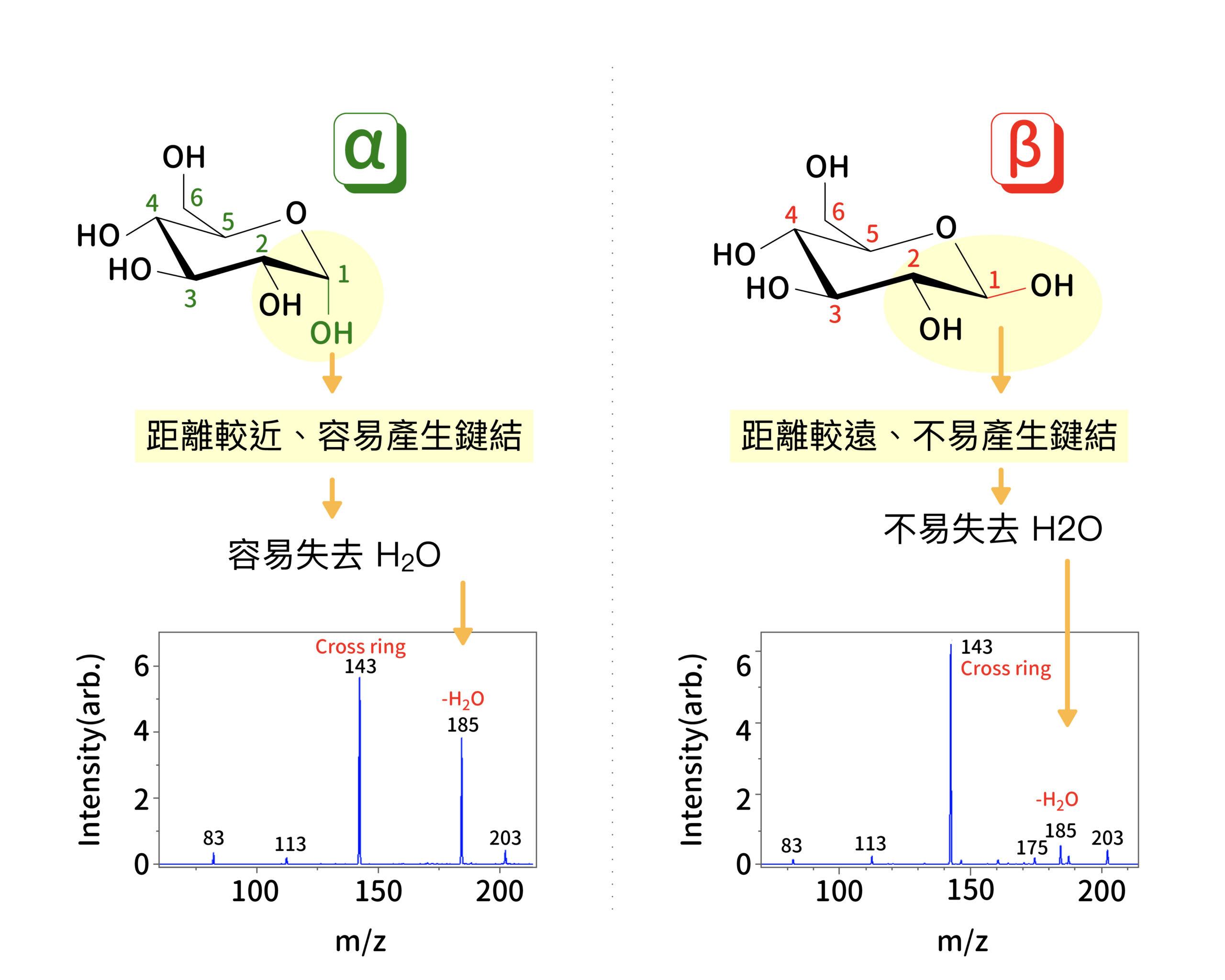𝛂-葡萄糖與 𝛃-葡萄糖在 1 號 OH 官能基的連接角度不同,導致官能基上氫原子躍遷到 2 號官能基的能量障蔽不同,而使兩種葡萄糖分子在質譜儀中,斷裂出水分子的比例不一樣。在質譜圖中,可看出 𝛂-葡萄糖在減少一個水分子的質荷比 185 處訊號強度,明顯高於 𝛃-葡萄糖。圖│研之有物、廖英凱(資料來源│Ni et al. Phys. Chem. Chem. Phys., 2017, 19, 15454)