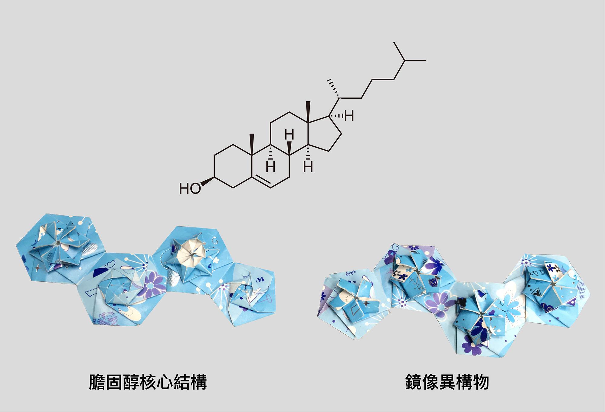 膽固醇的核心結構,由三個六環+一個五環組成,如同左側的摺紙。右側是摺反的鏡像異構物。 摺紙示範│洪上程 圖說重製│林婷嫻、張語辰