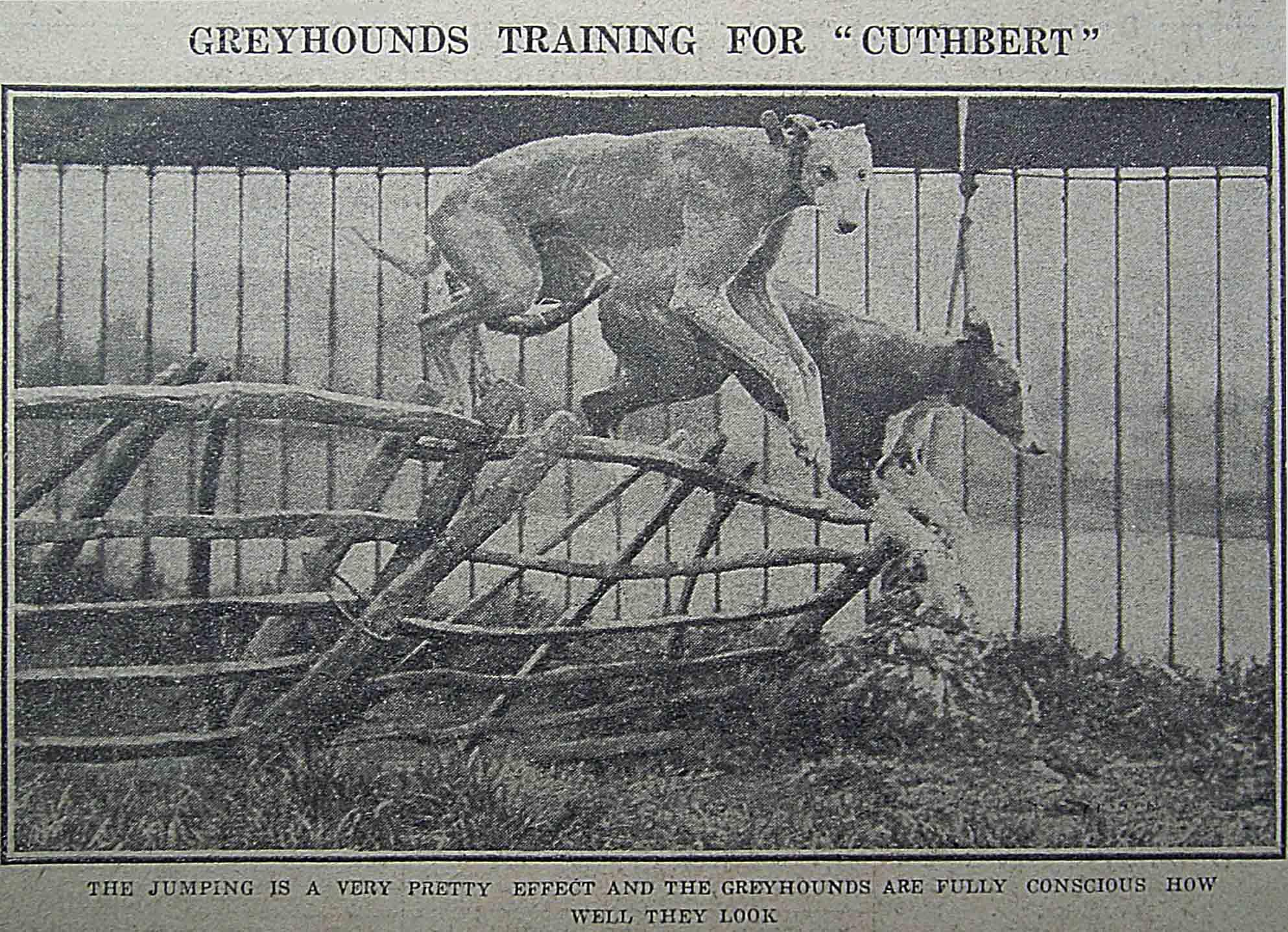 靈緹犬的身形瘦長,輕輕一躍,就優雅地跳過障礙。 資料來源│North China Daily News, 28 May 1928, p.12