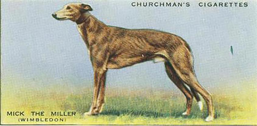 英國的運動狗明星 Mick the Miller 圖片來源│Wikipedia