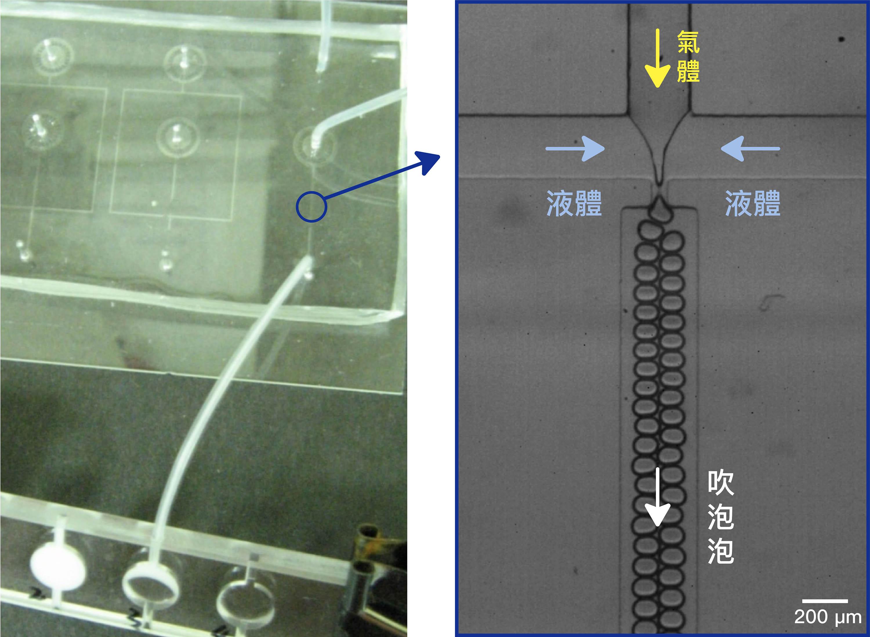 實驗中通入氣體和液體,利用微流道「吹泡泡」製作細胞鷹架,動態如下圖所示。 圖│林耿慧