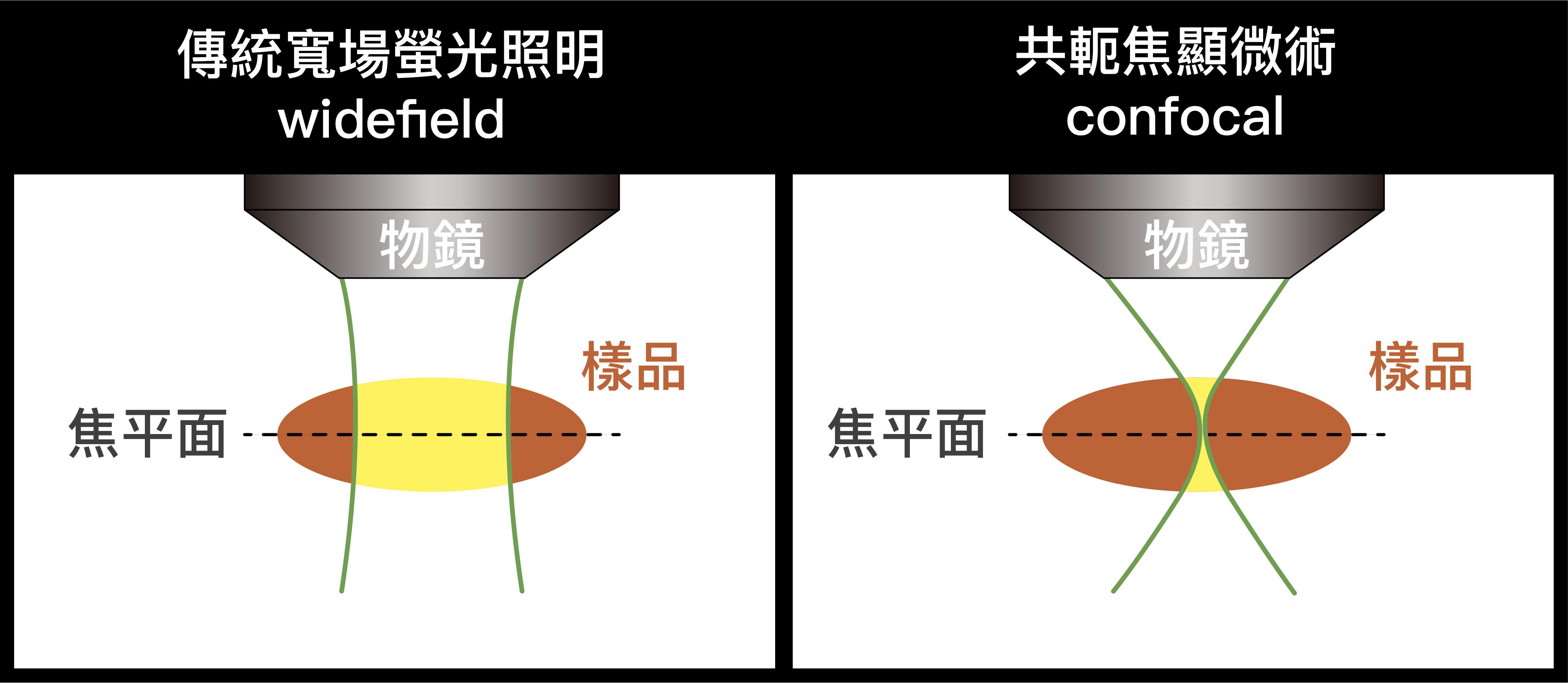 螢光顯微術的這兩種照明方式,樣品的背景區域皆會被光照到,而產生雜光。 資料來源│陳壁彰提供 圖說重製│廖英凱、張語辰