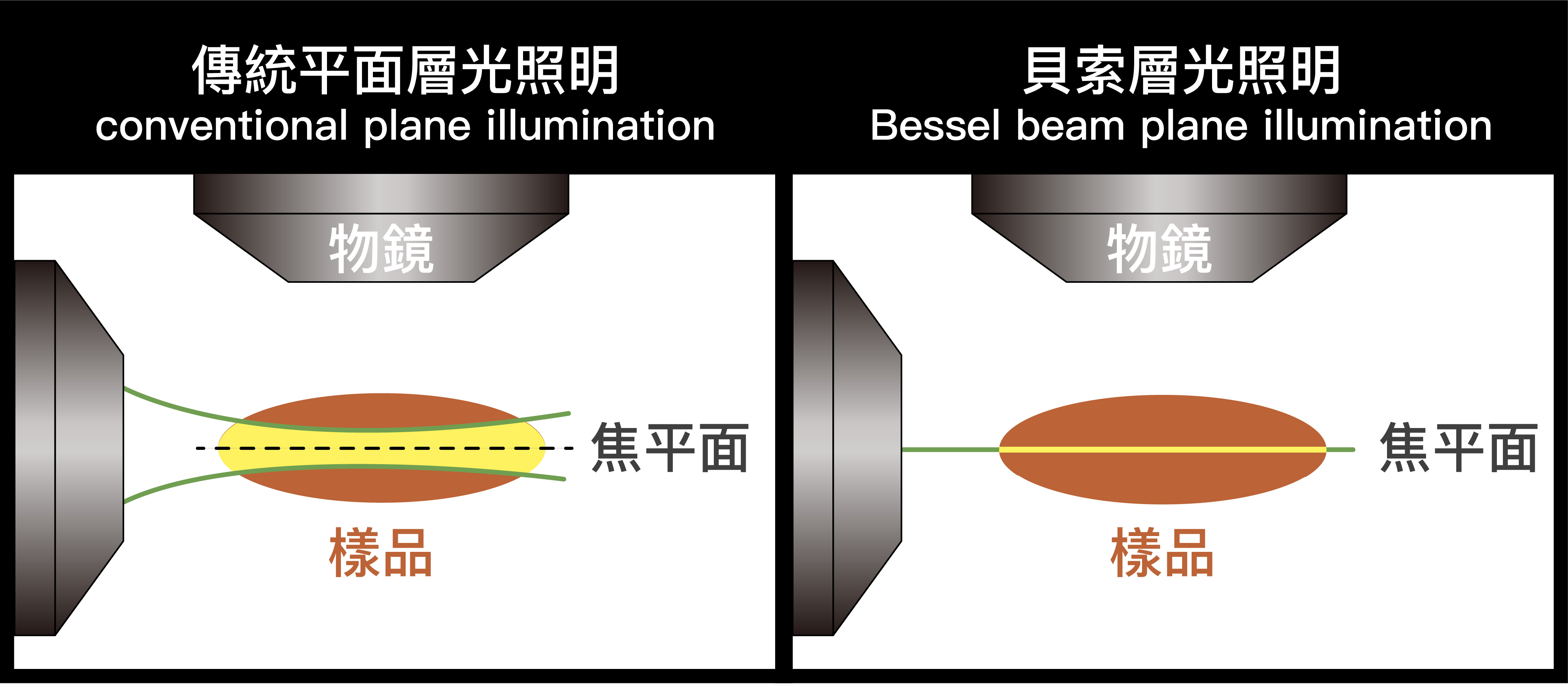 傳統平面層光照明,雖試著將光線聚焦於焦平面,然而其減少雜光的效果,還是不若貝索層光照明好。 資料來源│陳壁彰提供 圖說重製│廖英凱、張語辰