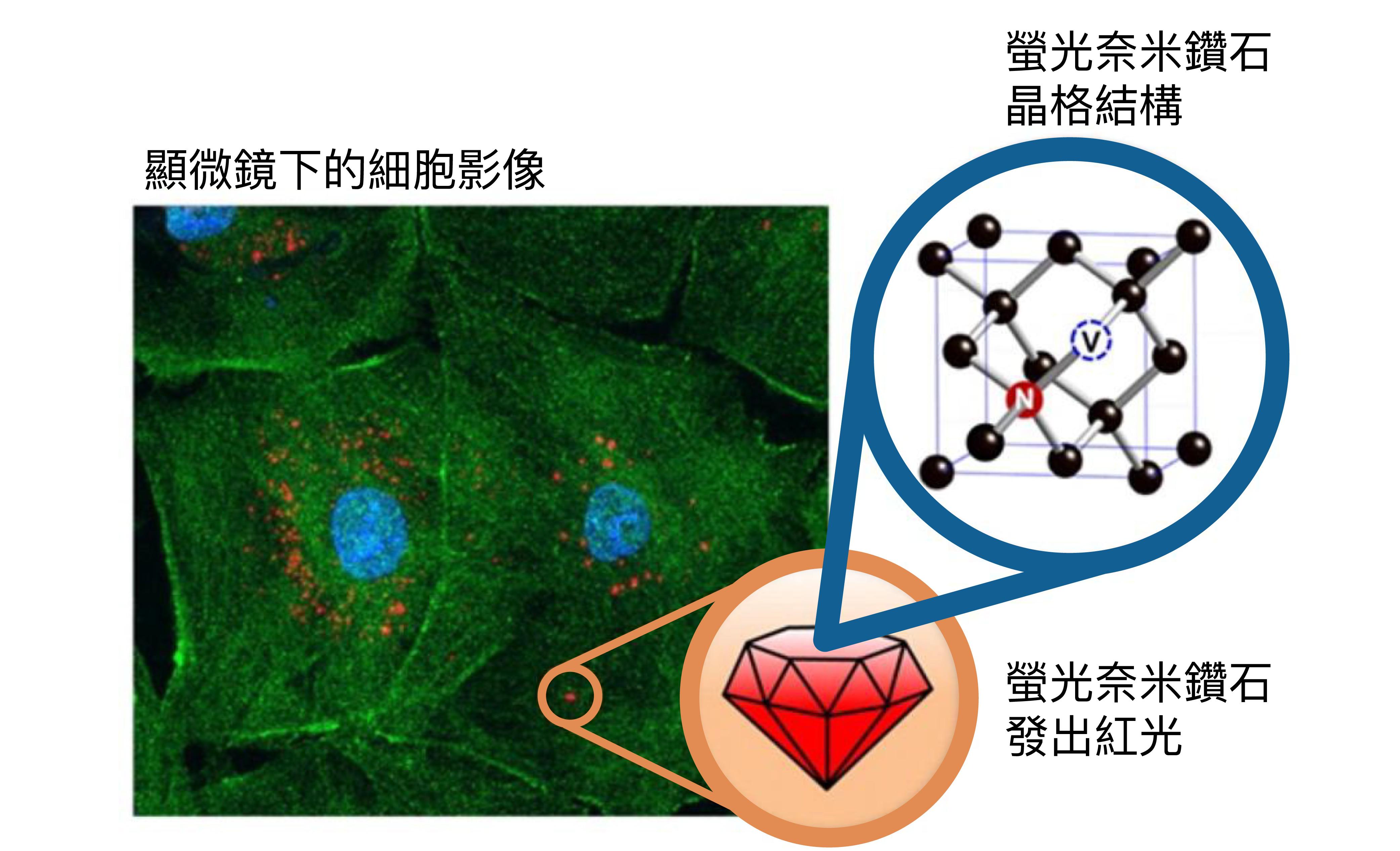螢光奈米鑽石晶格結構中,可以看到空缺 (V) 在氮原子 (N) 旁邊,形成「氮-空缺顏色中心」,是發光的關鍵。黑色的球是碳原子。圖│研之有物(資料來源│Acc. Chem. Res. 2016, 49, 3, 400-407)