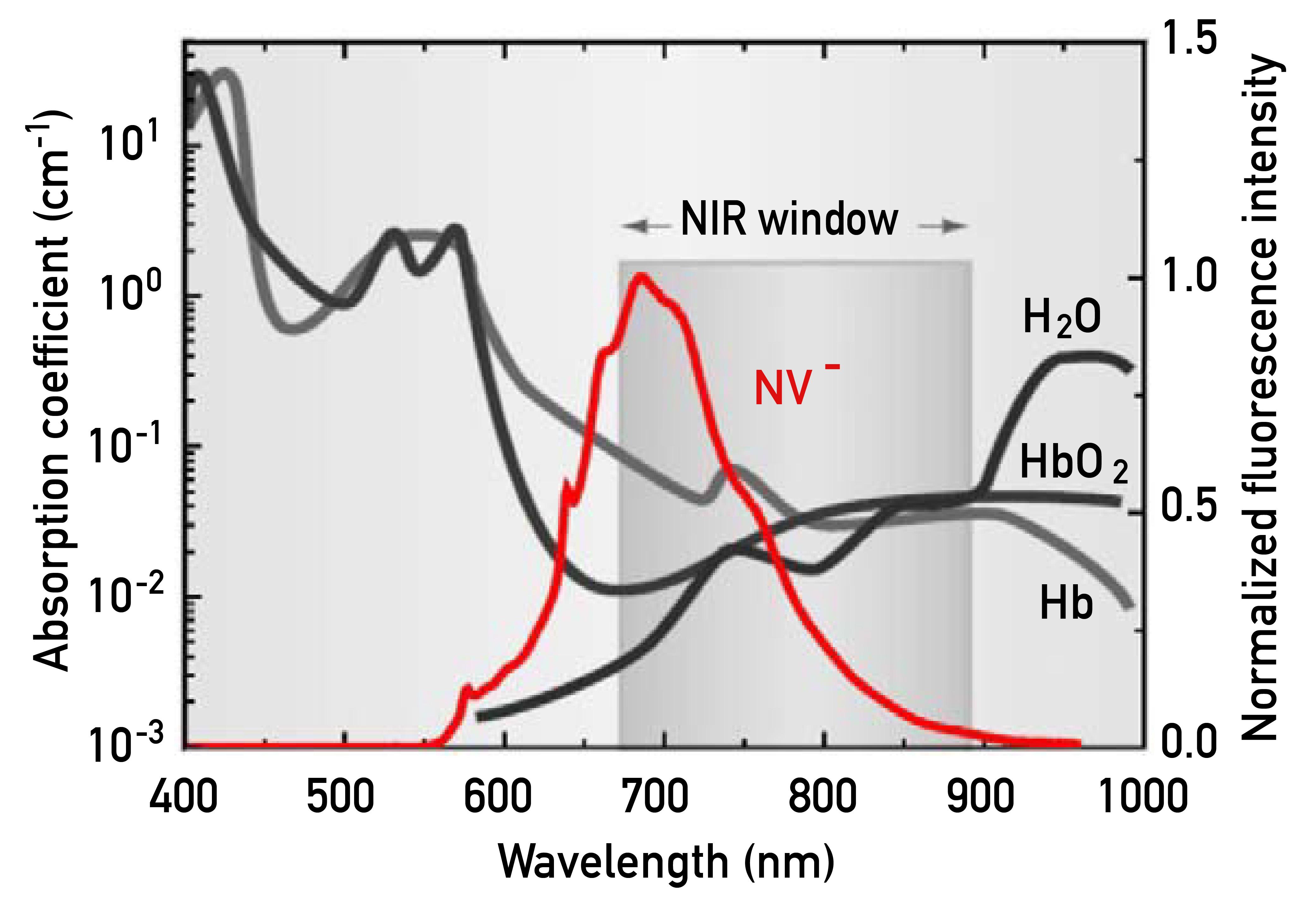 圖片中的「生物組織近紅外窗口(NIR Window)」,這段波長範圍剛好躲掉了人體血液、組織及水份的吸收帶,讓光能夠抵達人體深處。而螢光奈米鑽石發出的紅光(紅色曲線),波長大約 700 nm,可穿透生物組織,適合用於活體成像。 資料來源│〈螢光奈米鑽石〉,作者:張煥正