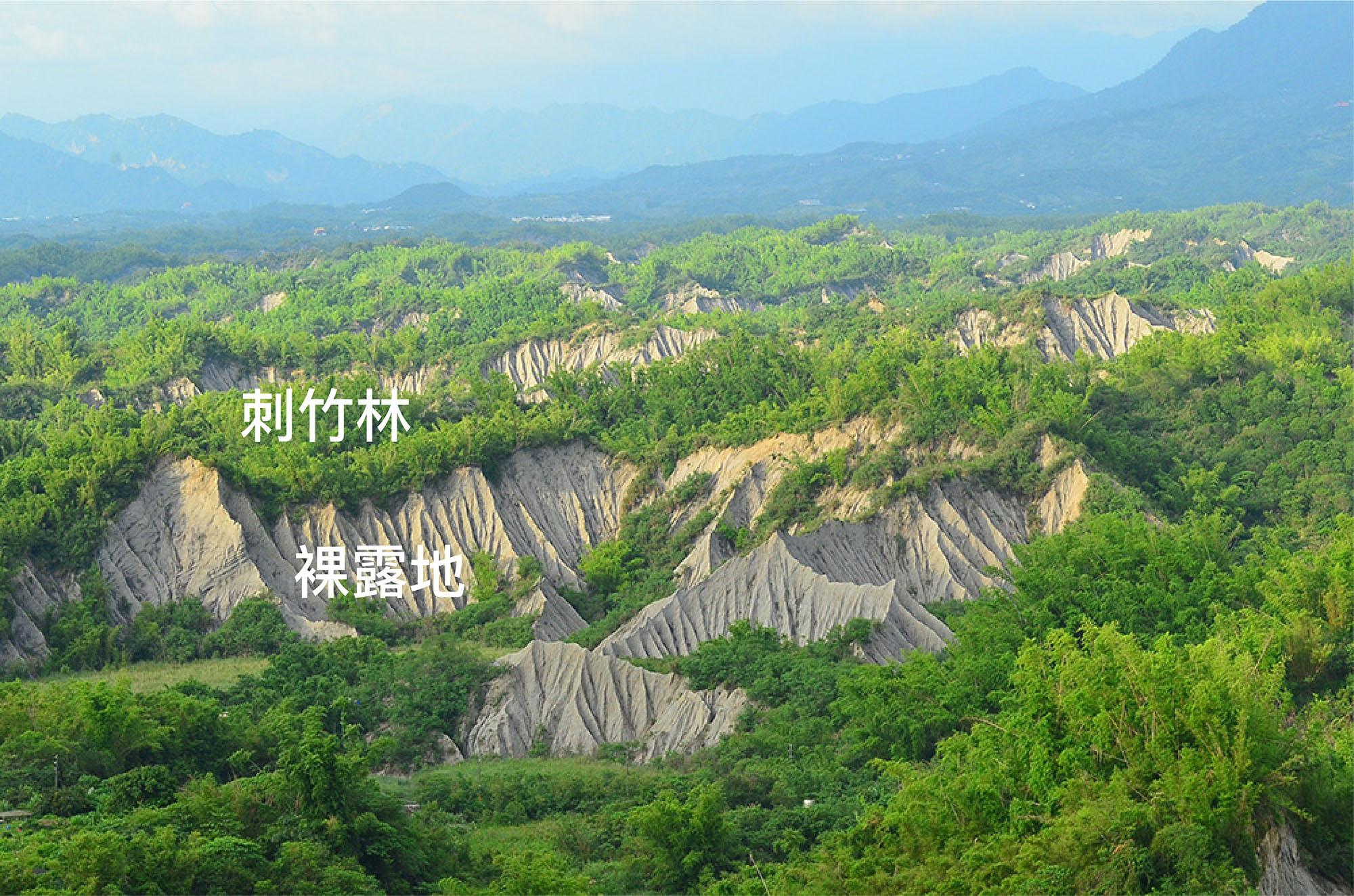 臺南左鎮的月世界。北向坡長滿綠意盎然的刺竹林,向陽乾燥的南向坡則維持裸露地。圖│邱志郁