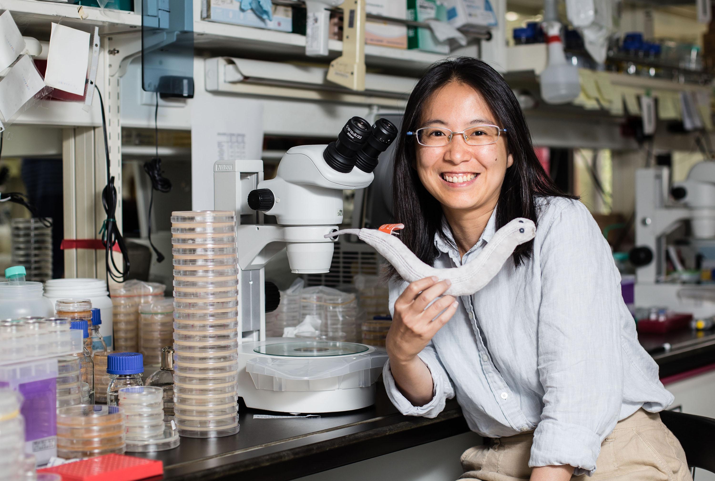 中研院分子生物研究所的薛雁冰助研究員,手上拿著線蟲娃娃,身旁一盒盒培養皿住著線蟲捕捉菌(一種真菌)。 攝影│張語辰