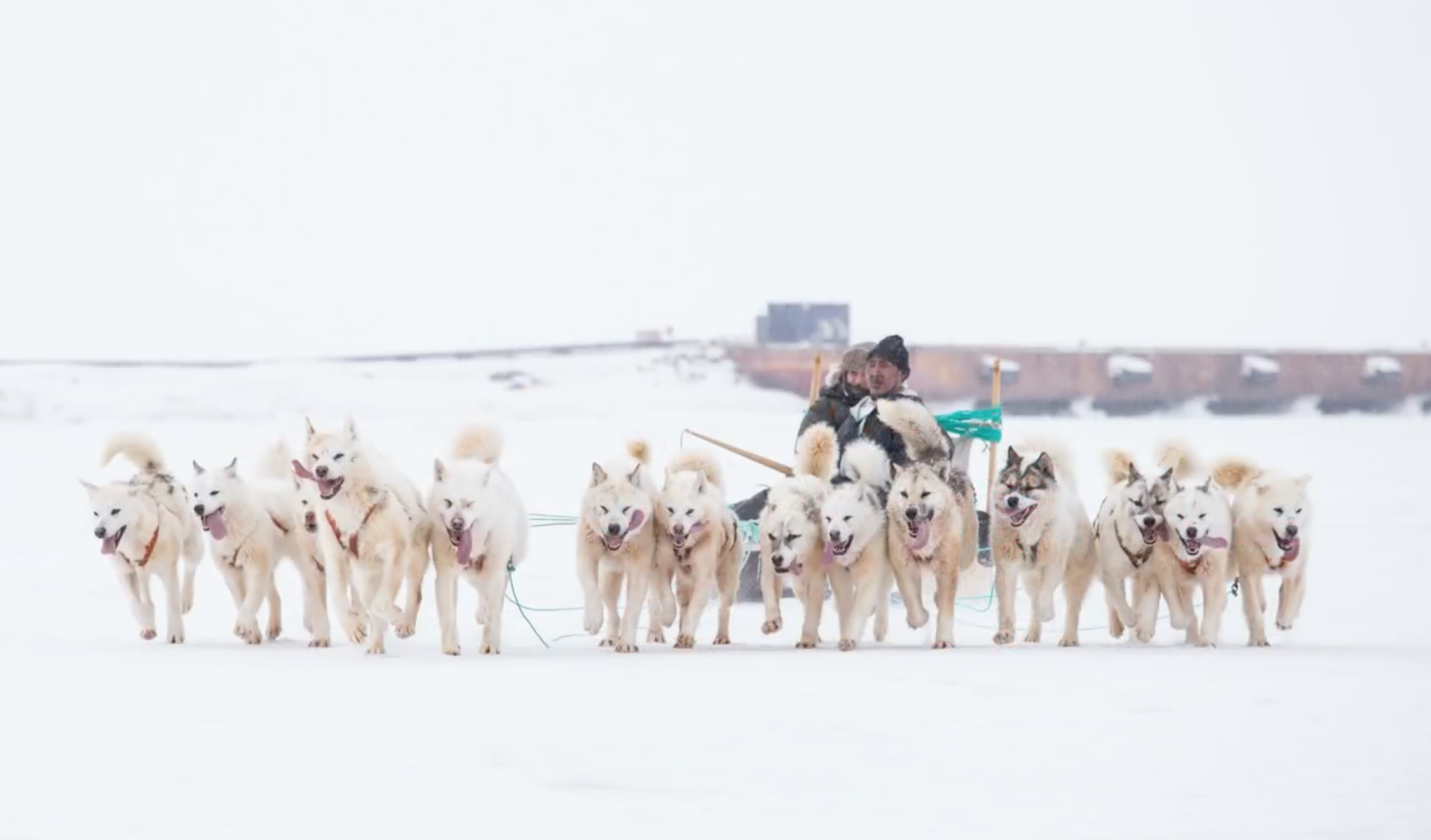 每年有三天的時間,圖勒基地會舉辦雪橇比賽,在結冰的海面上,比賽狗拉雪橇。這時因紐特人就會來到基地,順道帶一些土產來販賣。資料來源│「穹頂天眼—從格陵蘭看黑洞」紀錄片