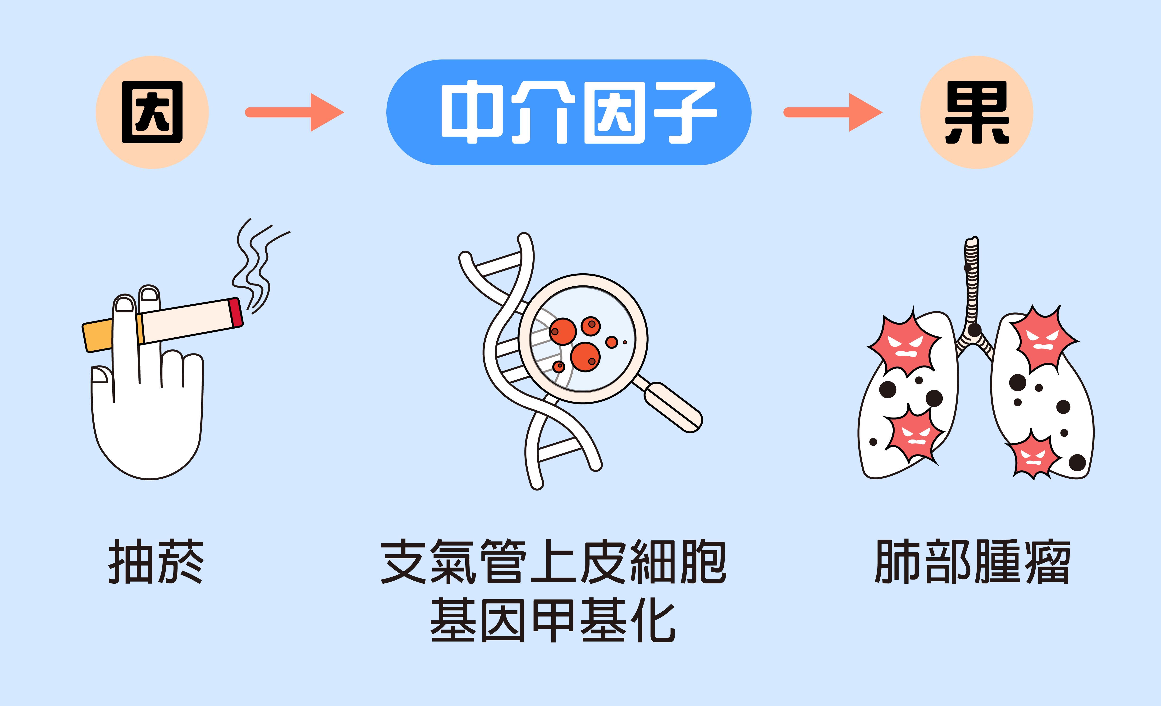 「因果中介模型」在於找出因和果中間發生什麼事。例如抽菸到肺部產生腫瘤的過程中,是因為香菸所含物質導致細胞基因產生變異(甲基化)。資料來源│黃彥棕 圖說設計│林婷嫻、林洵安