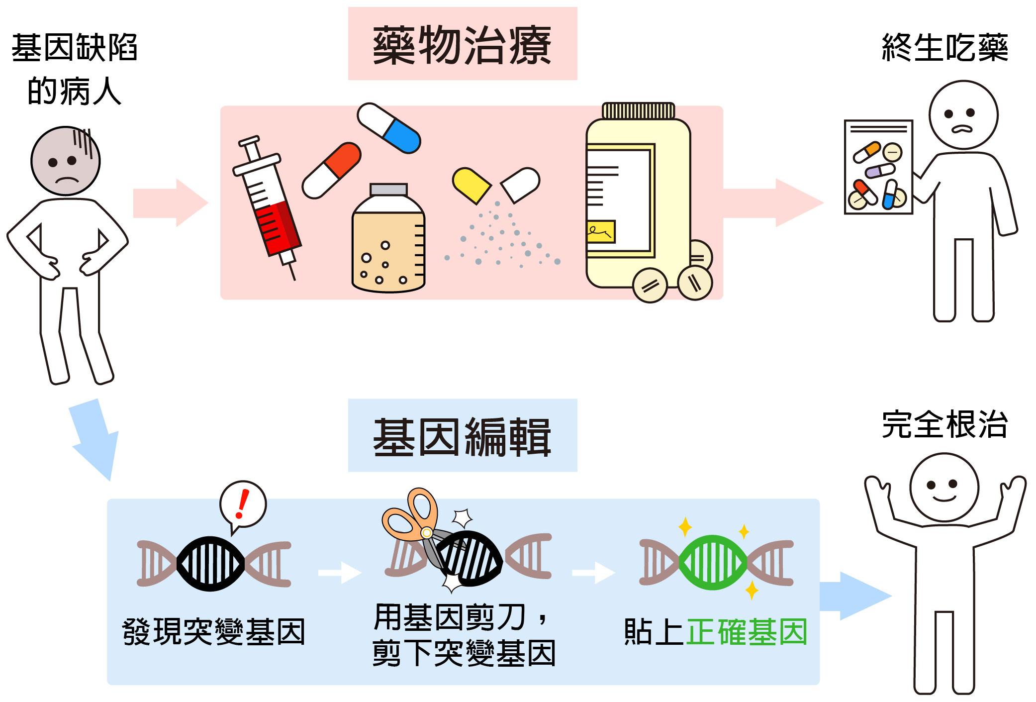 過去基因突變引發的疾病,藥物無法根治,必須終身吃藥。現代的基因編輯技術,可以徹底根治基因缺陷,就像用文書軟體修改錯誤一樣:找到錯字 (發現突變基因)、刪除錯字 (剪下突變基因)、補上正確的字 (貼上正確基因)。圖說設計│黃曉君、林洵安 資料來源│凌嘉鴻
