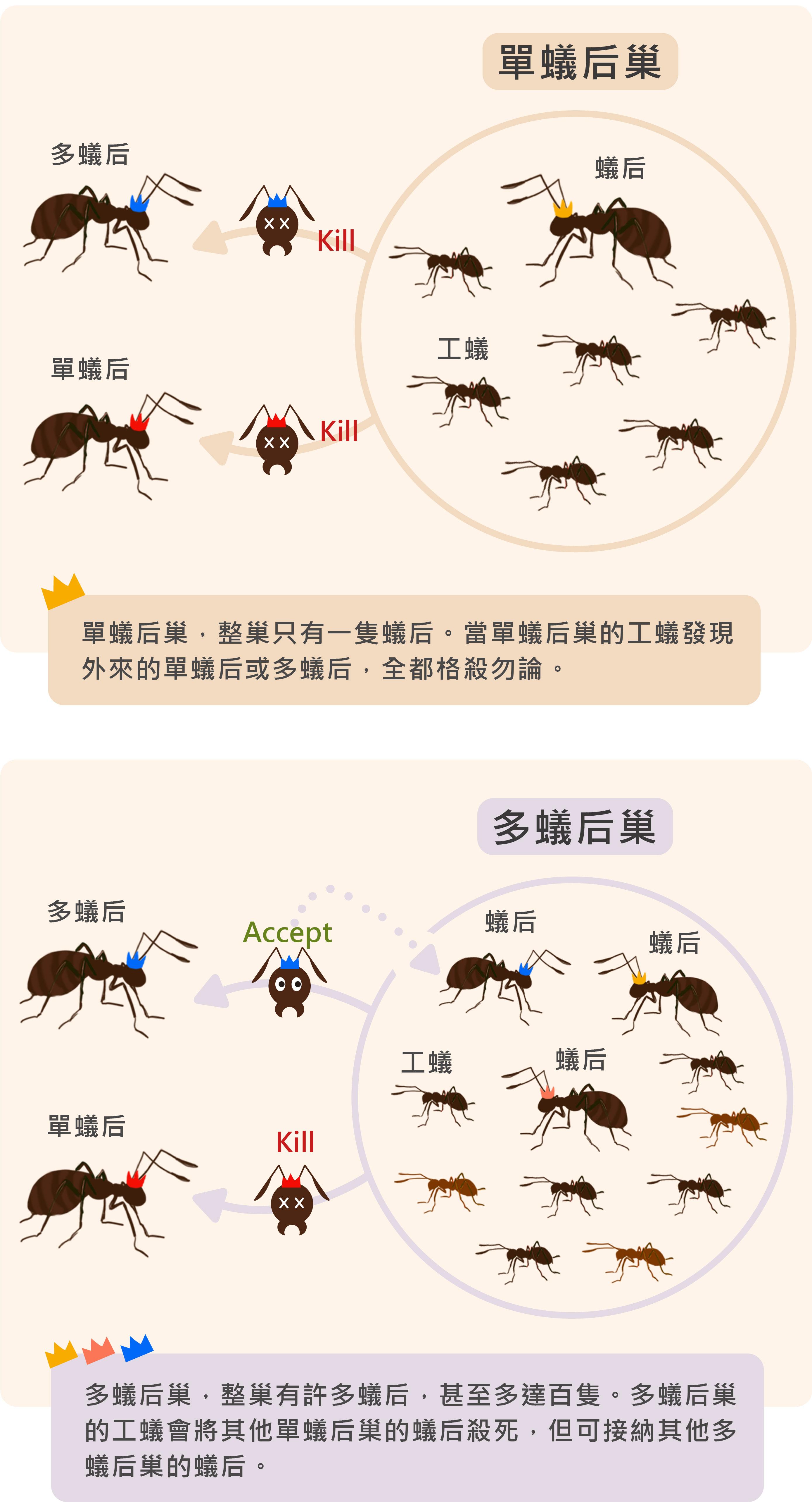 資料來源│王忠信 圖說設計│黃曉君、林洵安