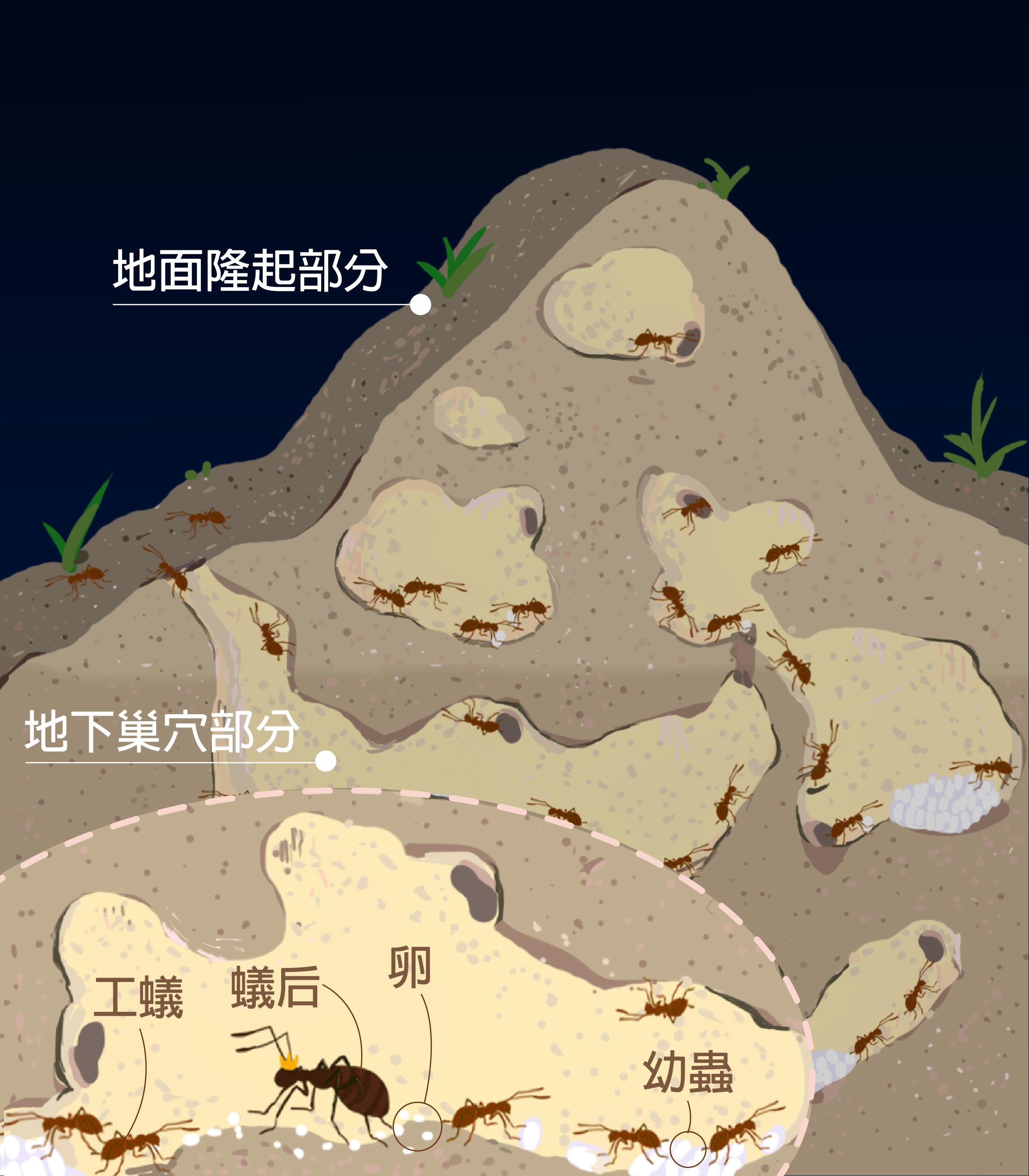 圖說設計│黃曉君、林洵安