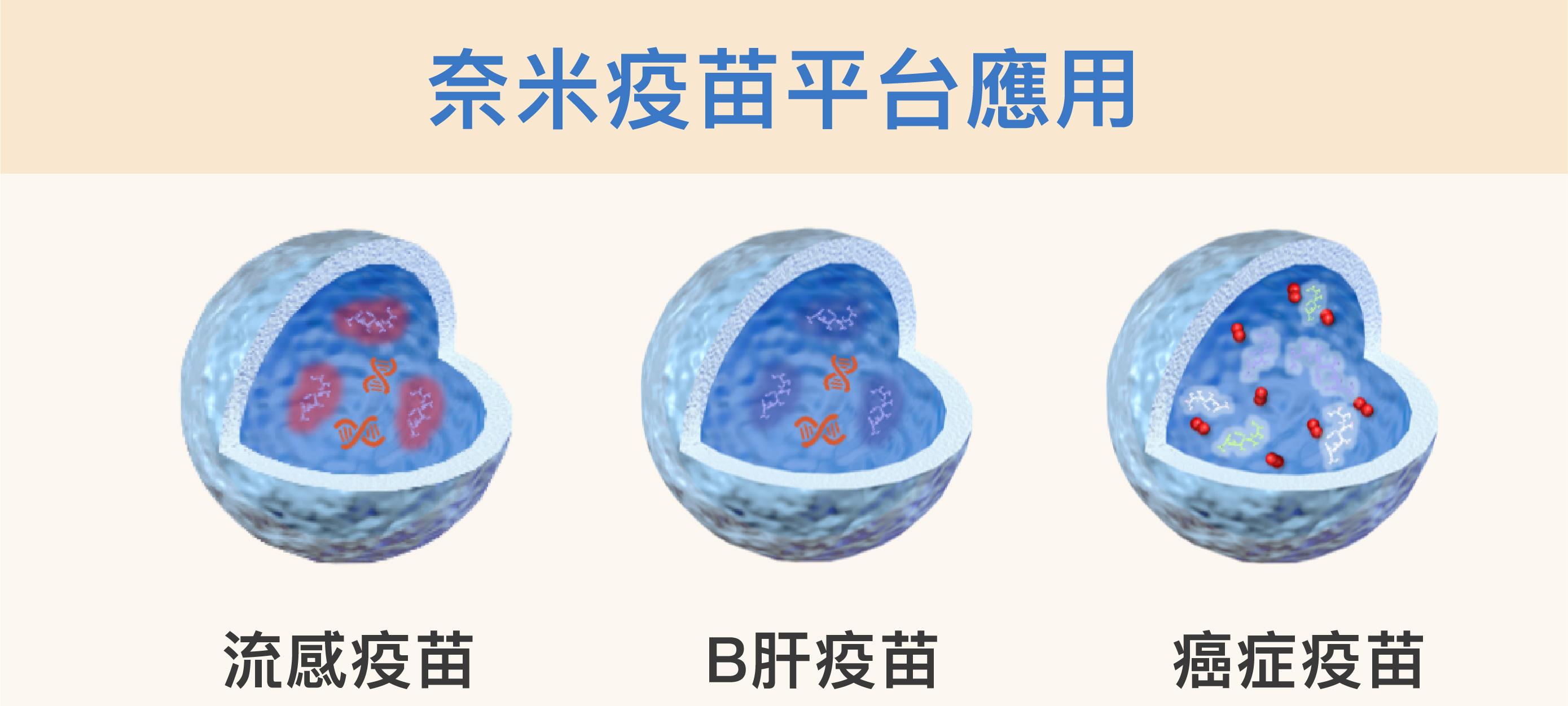 改變薄殼中空奈米粒子的外殼,並在裡頭放入不同的佐劑或藥物,就可能開發出流感、B肝或癌症等等不同疫苗。資料來源│胡哲銘 圖說美化│林洵安