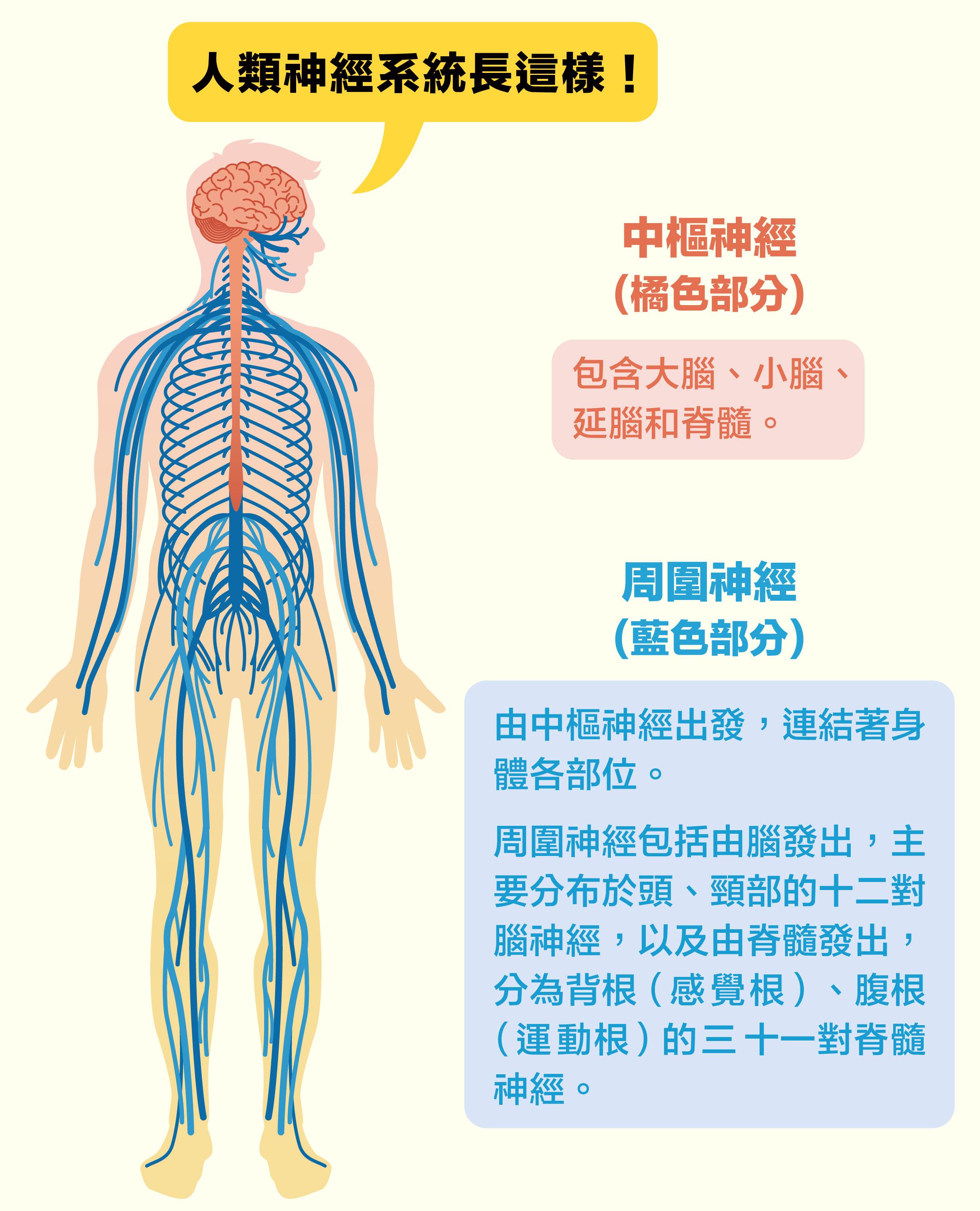 圖片來源│iStock圖說設計│黃曉君、林洵安