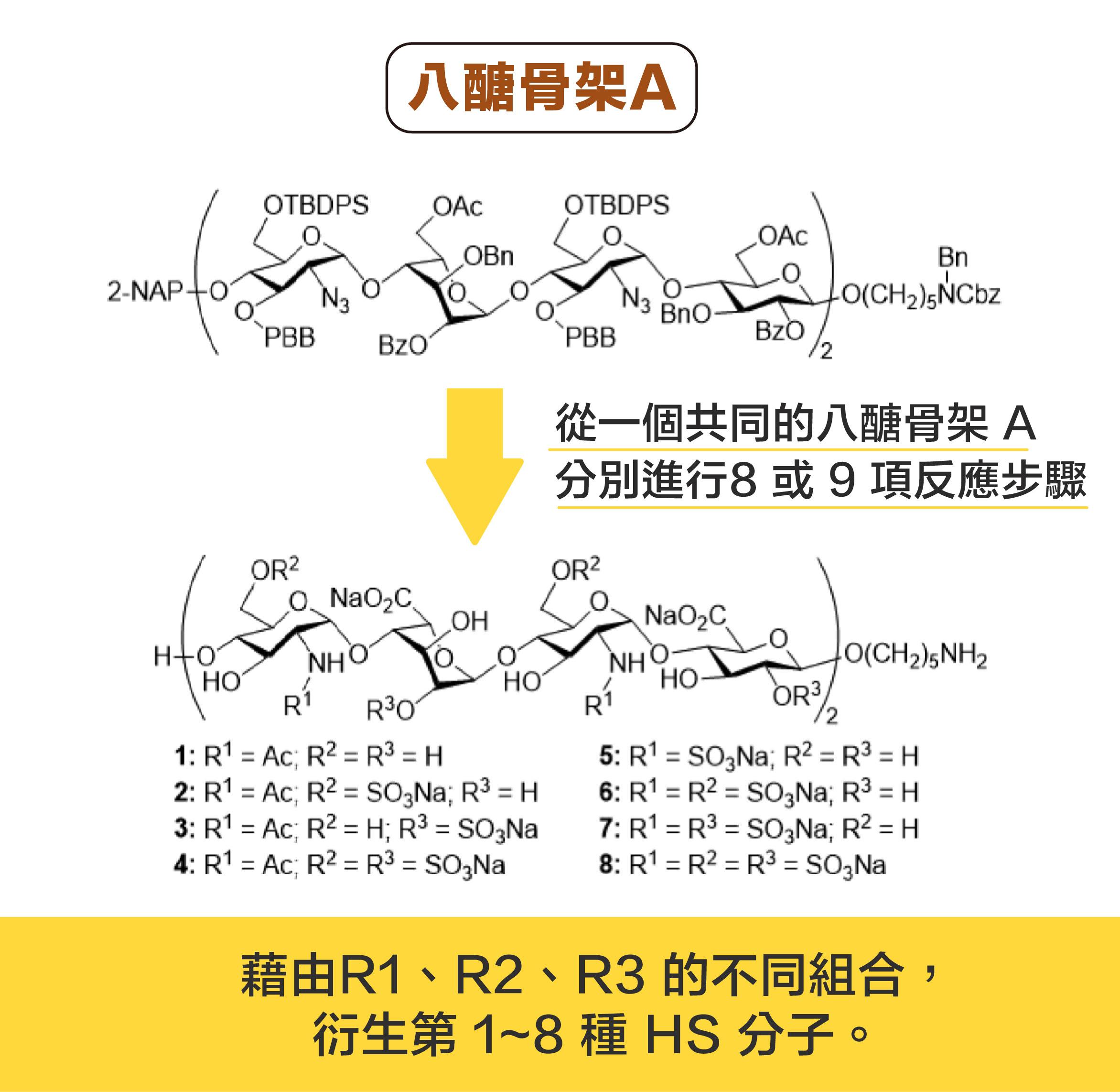 從一個共同的八醣骨架 A ,分別進行 8或 9 項反應步驟,可以衍生出 8 種 HS 分子。資料來源|洪上程圖說設計|黃曉君、林洵安
