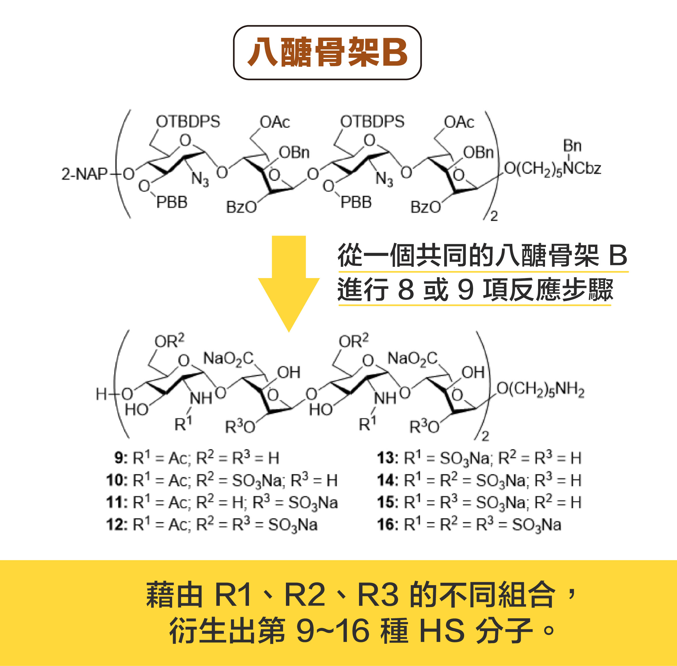 從一個共同的八醣骨架 B ,分別進行 8或 9 項反應步驟,可以衍生出 8 種 HS 分子。資料來源|洪上程圖說設計|黃曉君、林洵安
