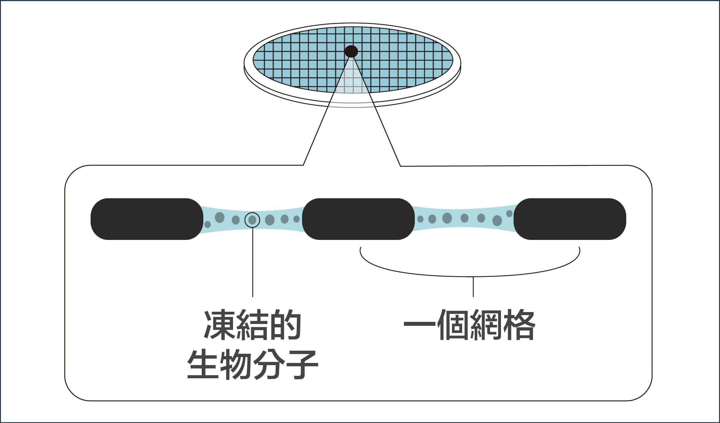 第三步:在攝氏 -190 度的低溫中,研究員進行電子顯微鏡的觀測,可保生物分子結構不受影響。資料來源│諾貝爾獎官網 2017 化學獎冷凍電子顯微鏡簡介  圖說設計│廖英凱、林洵安