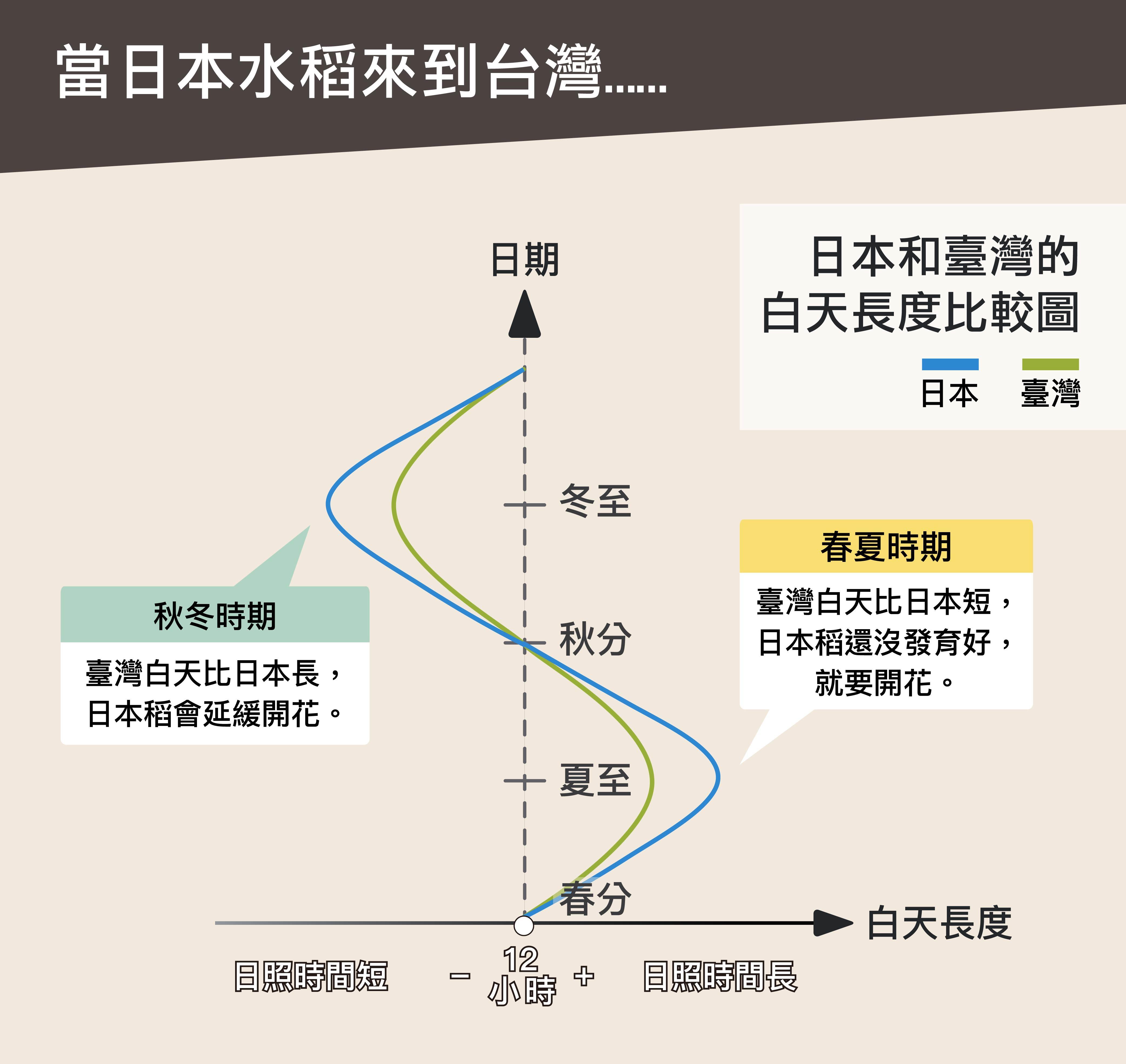 日本來的水稻在緯度較低的臺灣種植,春、夏稻子尚未發育完全就提早抽穗,秋、冬又會延遲抽穗,一年只有一穫,品質也不好。圖說設計│黃曉君、林洵安
