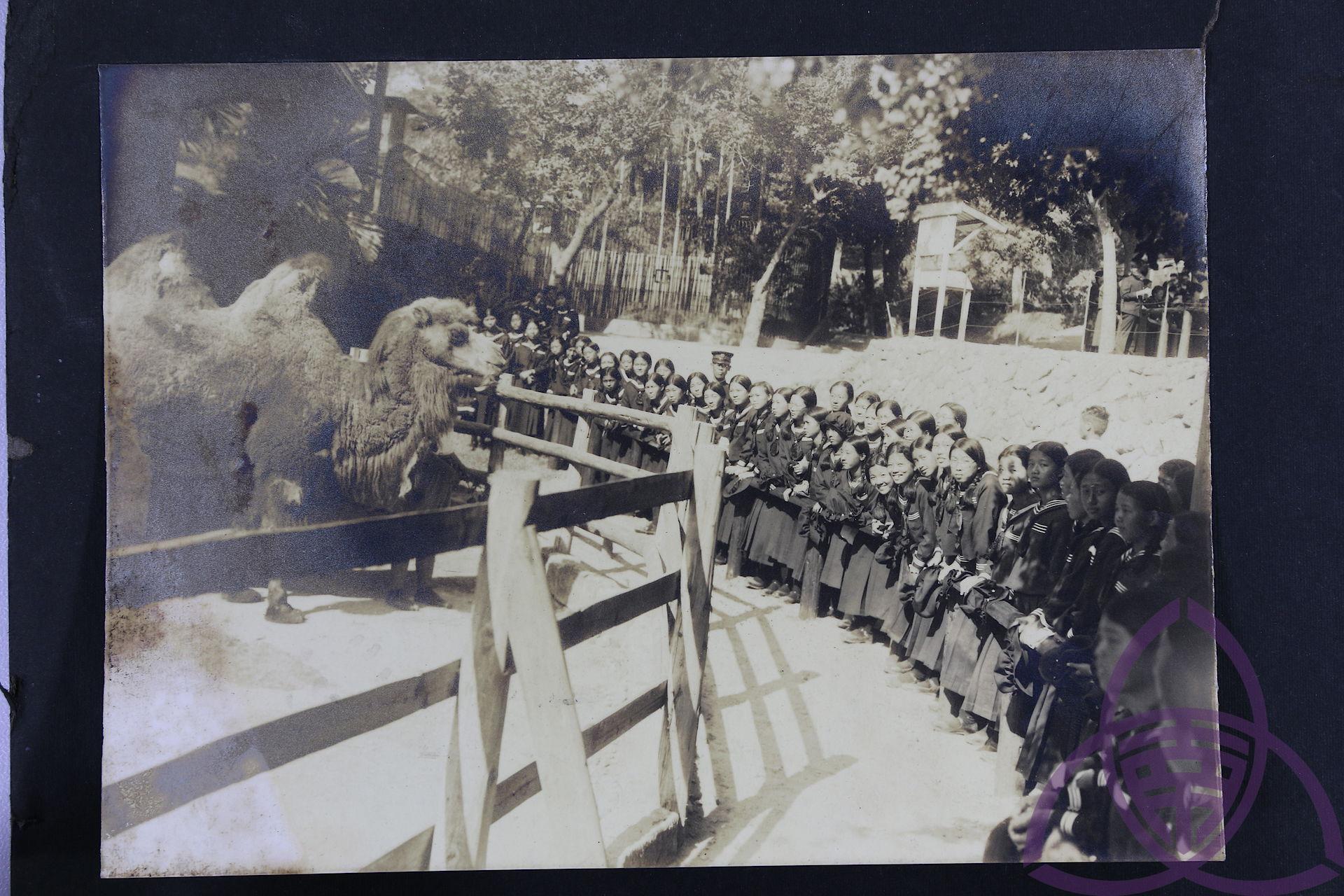 1914 年開園的圓山動物園,在日治時代是新潮的現代化景點,也是新春熱門出遊地,許多父母會在新年假期帶小孩動物園玩。圖為 1920 年代,二高女學生到動物園校外旅遊。圖│臺南女中百年老照片