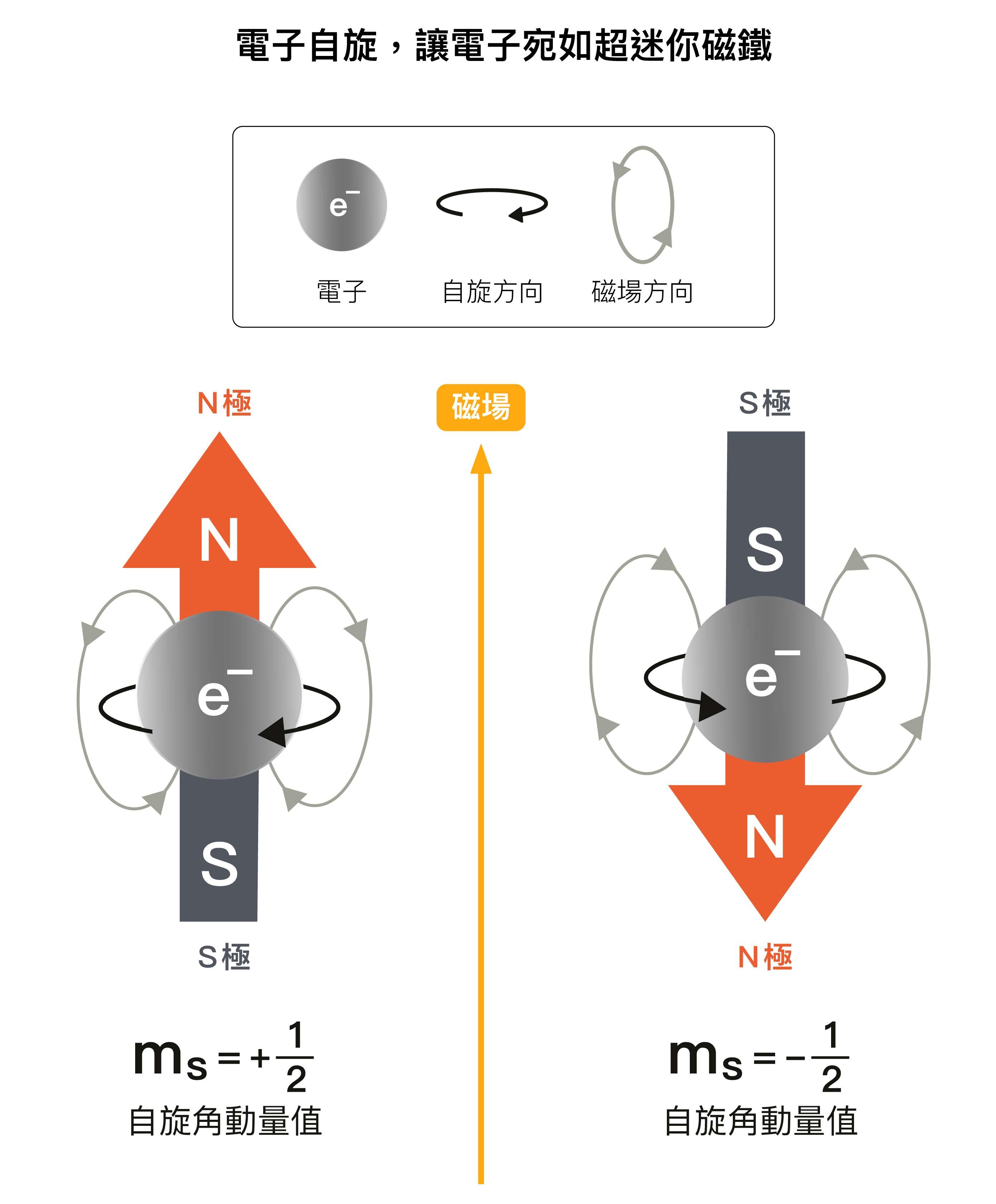 電子雖有角動量,卻不能理解成電子真的在轉。因為電子是個體積無限小的粒子,沒有體積,所以不可能轉動,自旋完全是量子力學的概念。而且電子自旋角動量值在磁場中只能是 1/2 或 -1/2 ,沒有其他可能的值,這就是「電子自旋 1/2 」的由來。圖說設計│黃曉君、林洵安