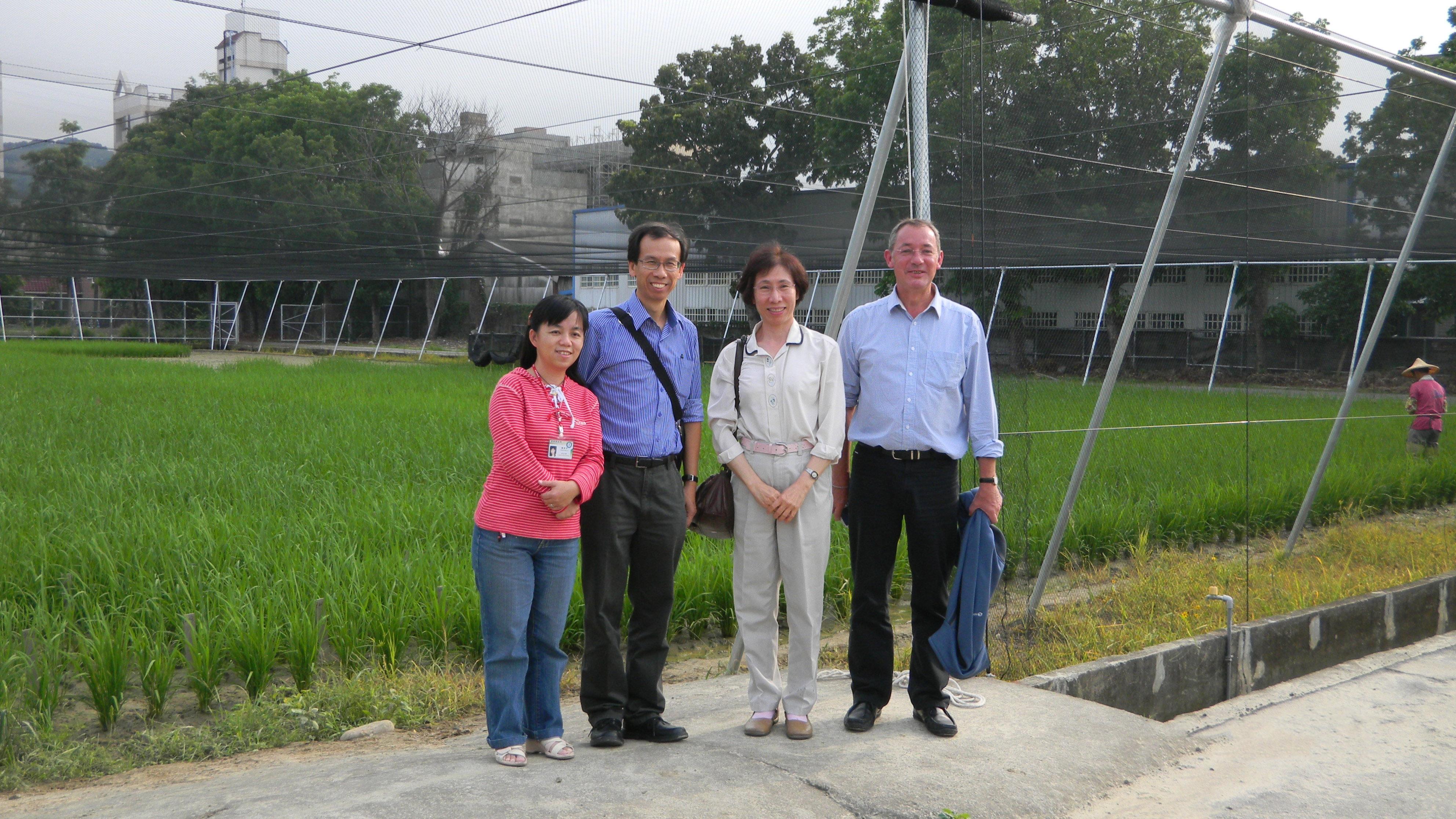 余淑美 (右二) 以及來自國際稻米研究中心的 C4 計畫第一到第三期總主持人(右一)、國際稻米研究中心訪問學者(左二)、學生羅舜芳博士(左一),於水稻實驗水田旁合影。圖片來源│余淑美