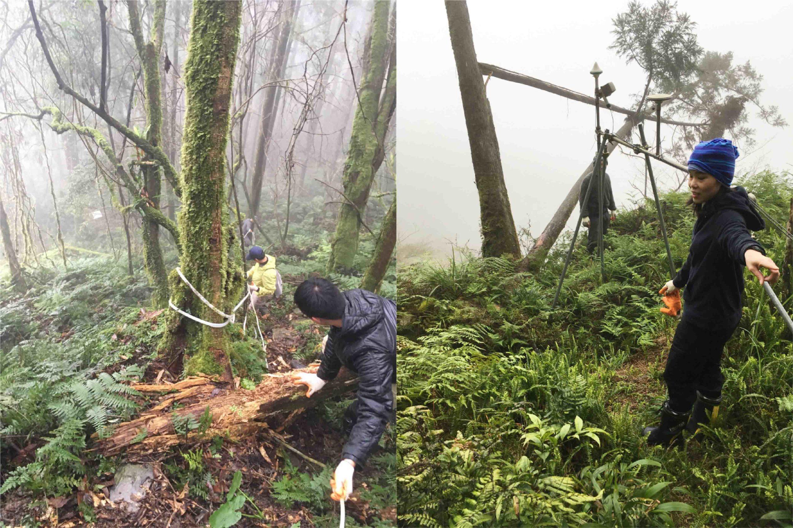 許雅儒與團隊前往宜蘭太平山野外觀測站,進行研究工作。圖│許雅儒提供