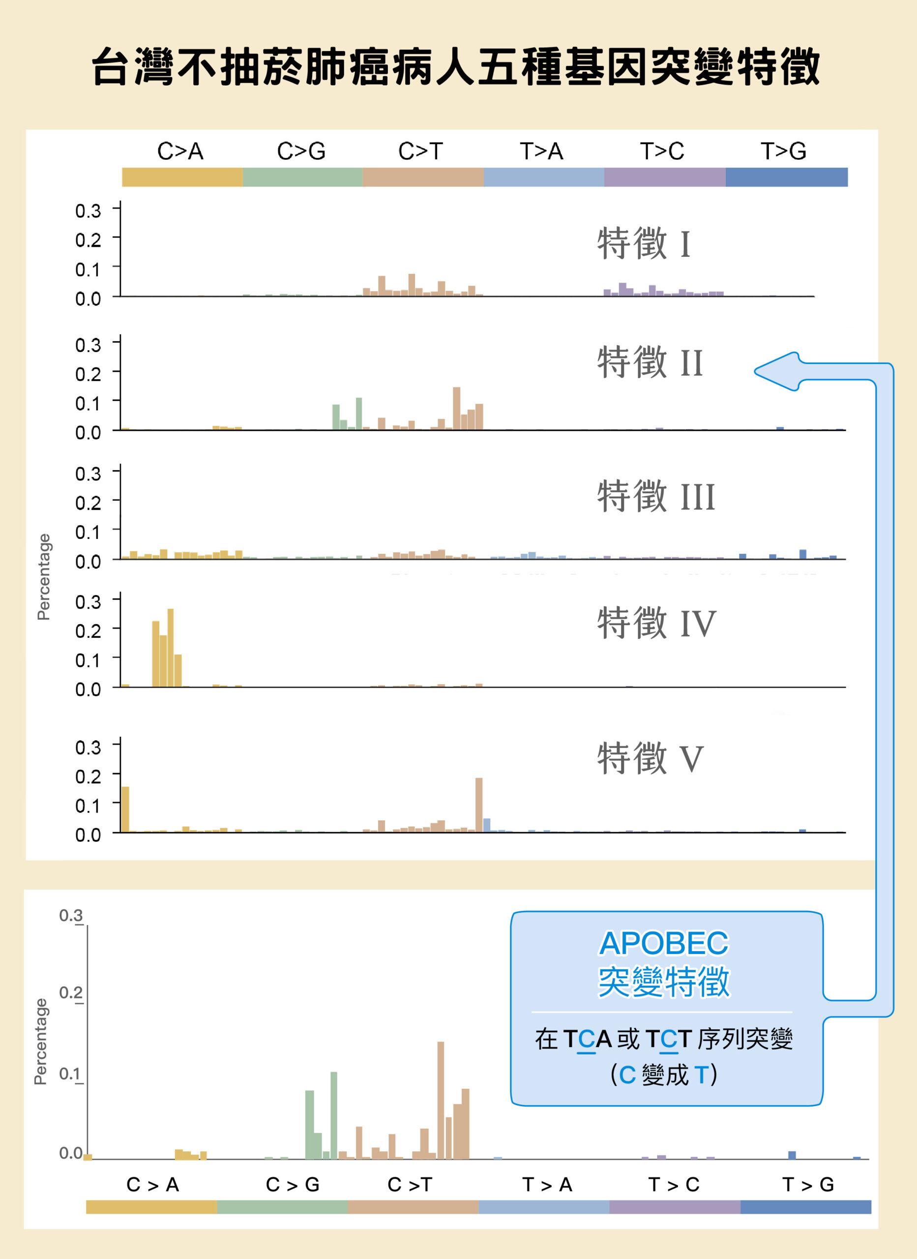 中研院統計所陳璿宇副研究員統計 103 位病人的檢體,鑑定出東亞肺癌具有上圖五種突變特徵。以第二列為例,主要為 C>G 和 C>T 的突變,乃是 APOBEC 造成的突變特徵。APOBEC 為 RNA 編輯酶家族,有 11 個成員,能把胞嘧啶核苷酸(C)的氨基去掉,使它變成尿嘧啶核苷酸(U)。APOBEC 過度表達,再加上 DNA 修復機制的作用,就會形成 C>G 和 C>T 的突變特徵。圖│陳玉如
