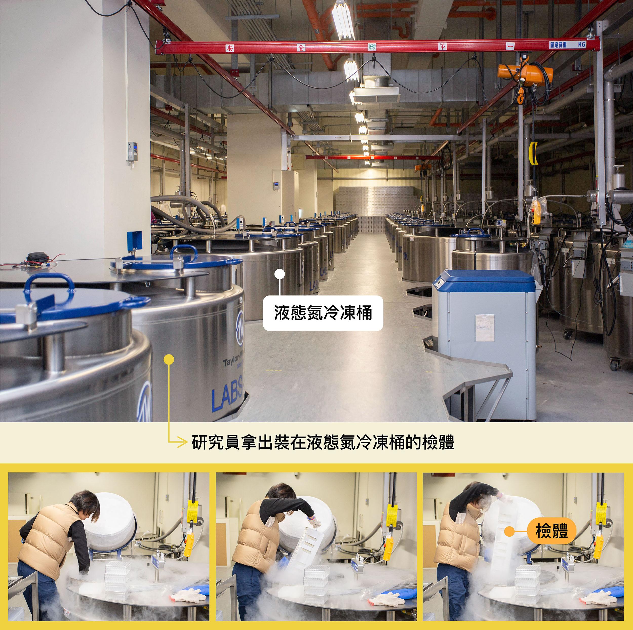 珍貴的檢體裝在冷凍管,部分儲存在攝氏零下 180 度液態氮冷凍桶中,檢體總數量已達三百萬管。圖│研之有物