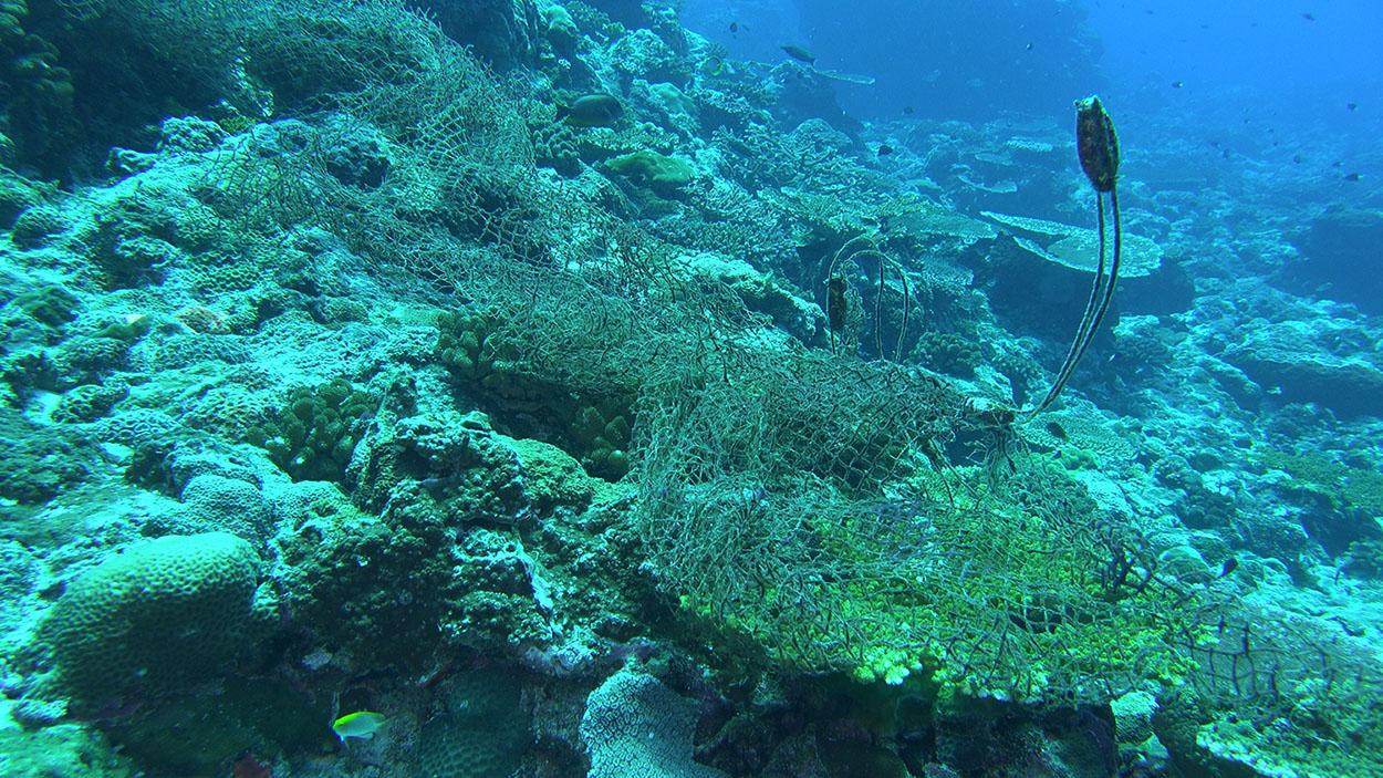 全球海底有 10 萬張以上廢棄漁網,常纏繞在珊瑚礁盤上、纏住許多海洋生物,破壞生態。圖│鄭明修