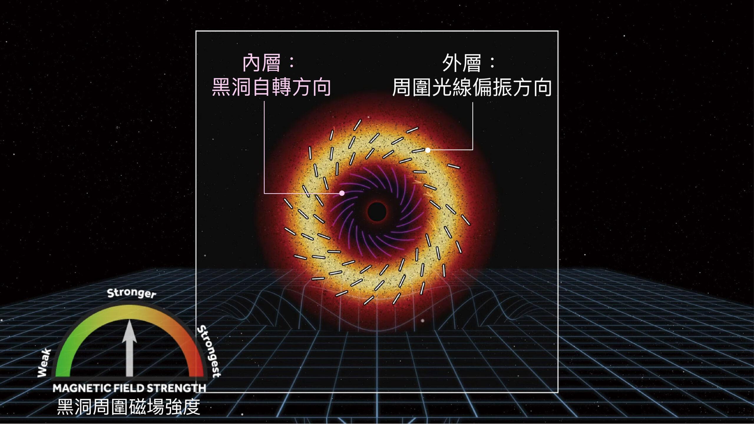 M87 星系中心黑洞的自轉方向(順時鐘)與周圍光線偏振方向(逆時鐘)剛好相應,而這個特定的偏振方向,也就形成黑洞照片上類似丹麥甜甜圈的特殊紋路。圖│EHT Collaboration and Crazybridge Studios